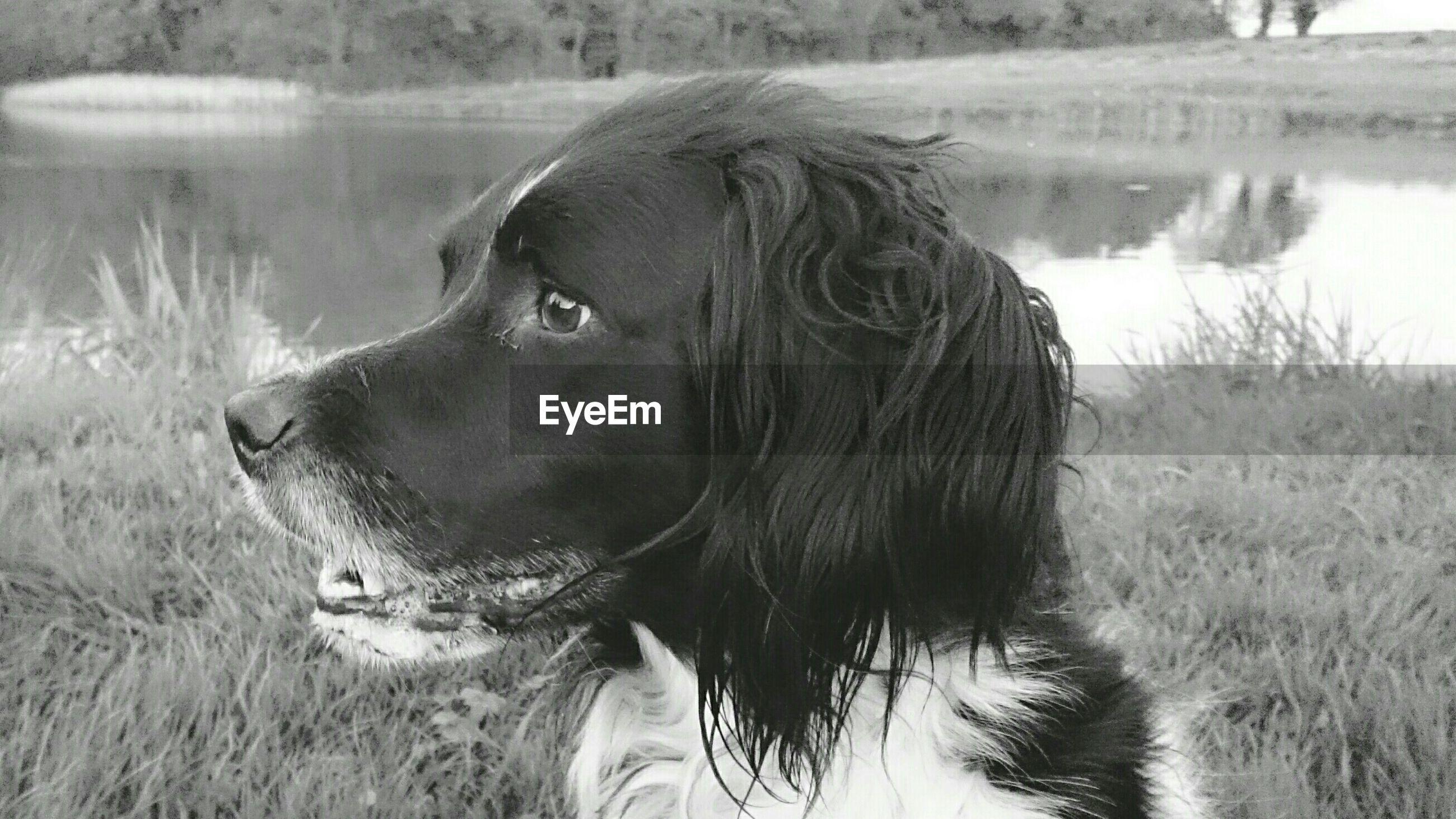 Close-up of dog at lakeshore