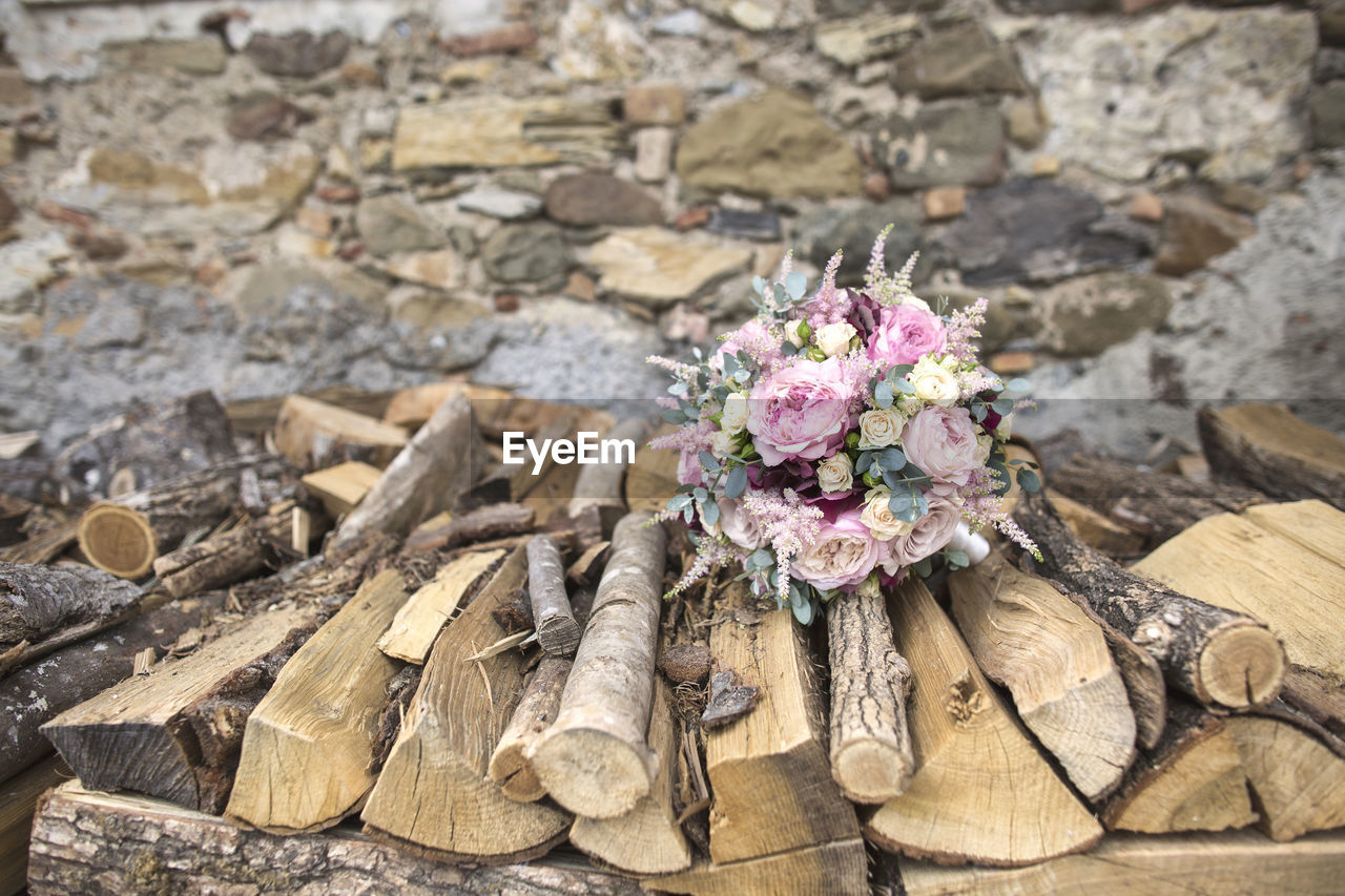 flower, flowering plant, plant, wood - material, nature, beauty in nature, no people, close-up, solid, day, high angle view, pink color, outdoors, focus on foreground, freshness, fragility, vulnerability, rock, rock - object, flower head