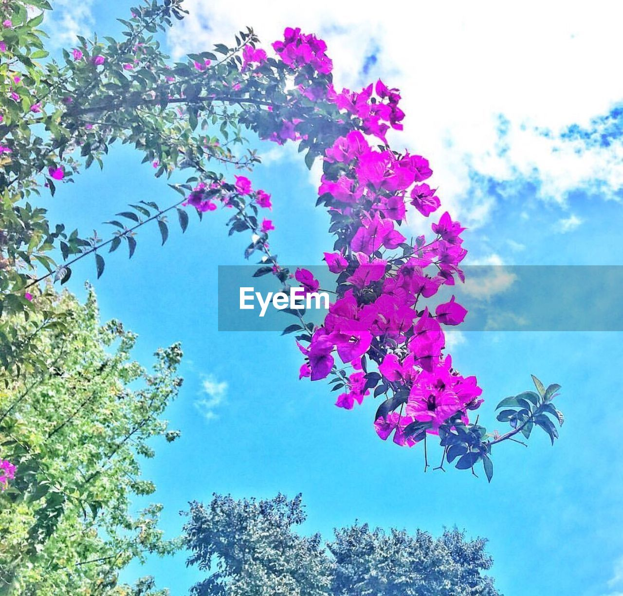 tree, low angle view, growth, sky, nature, day, no people, beauty in nature, outdoors, plant, branch, flower, animal themes, close-up