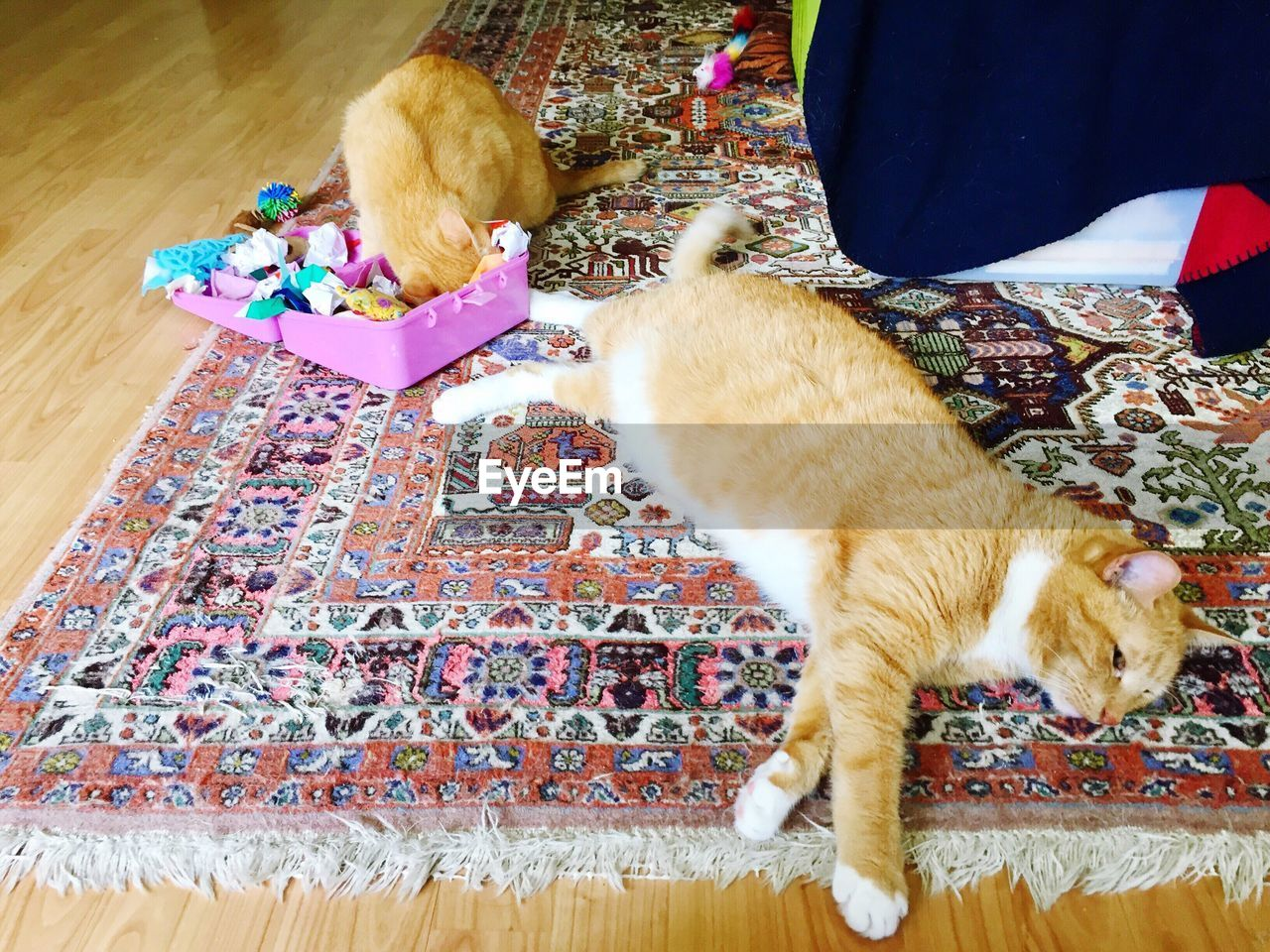 pets, domestic animals, domestic cat, indoors, mammal, animal themes, one animal, high angle view, feline, home interior, no people, sitting, relaxation, multi colored, day, close-up