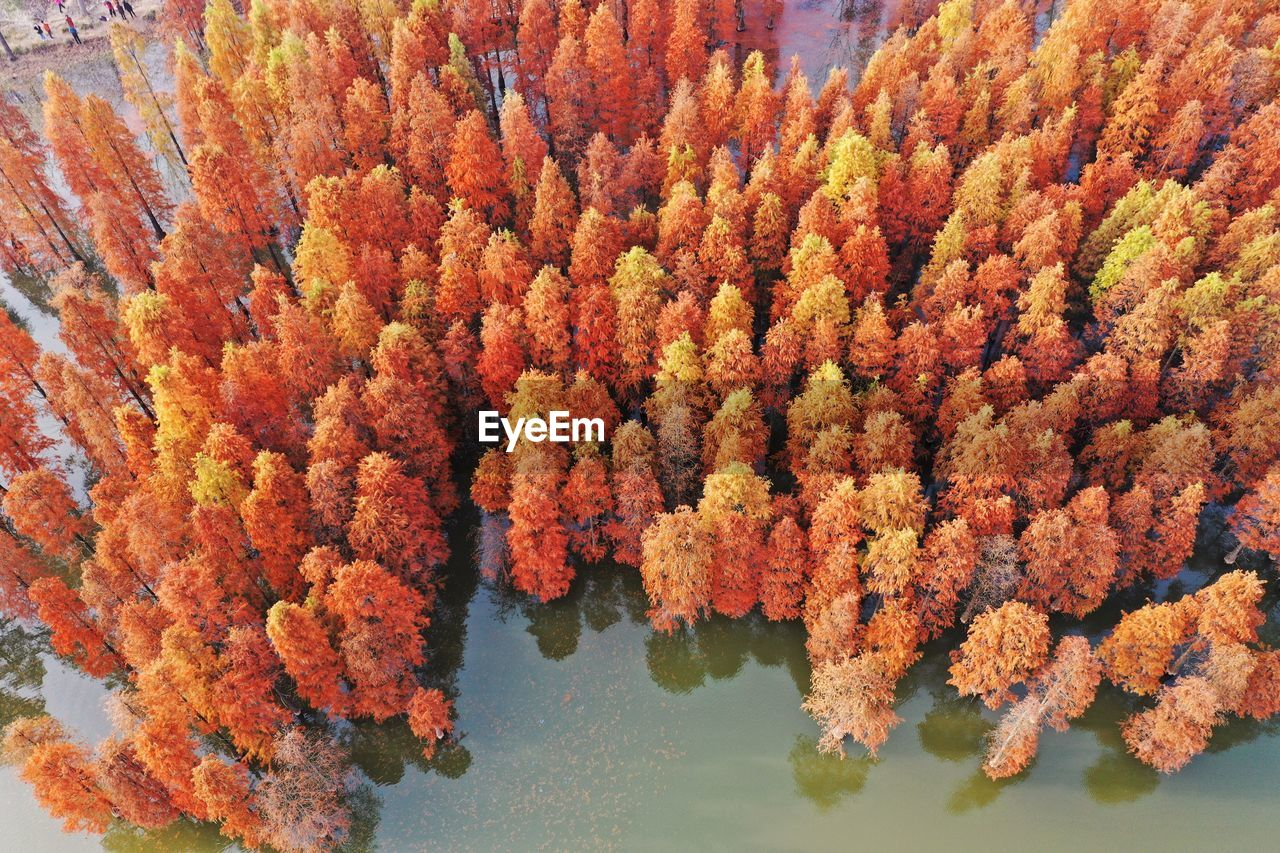autumn, orange color, change, nature, tree, no people, plant, day, beauty in nature, water, high angle view, outdoors, close-up, leaf, flower, plant part, growth, flowering plant, full frame, autumn collection, natural condition