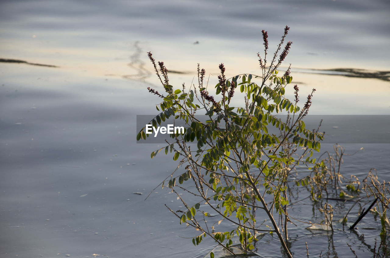 water, lake, nature, plant, beauty in nature, no people, day, growth, flower, tranquility, cloud - sky, reflection, flowering plant, outdoors, animals in the wild, sky, waterfront, close-up, animal wildlife