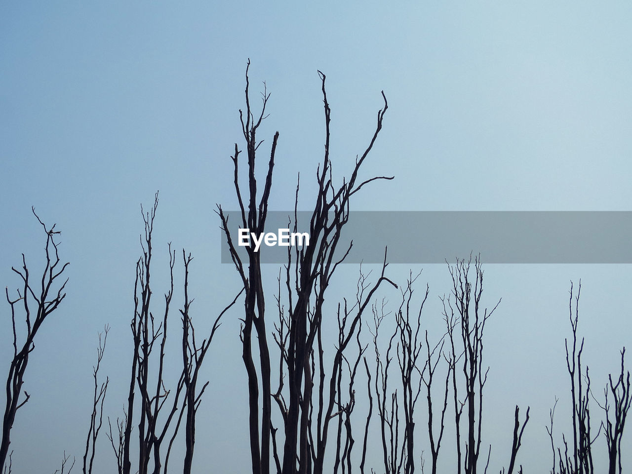 nature, bare tree, clear sky, tranquility, low angle view, day, growth, plant, outdoors, no people, dead plant, beauty in nature, branch, blue, dried plant, tree, sky