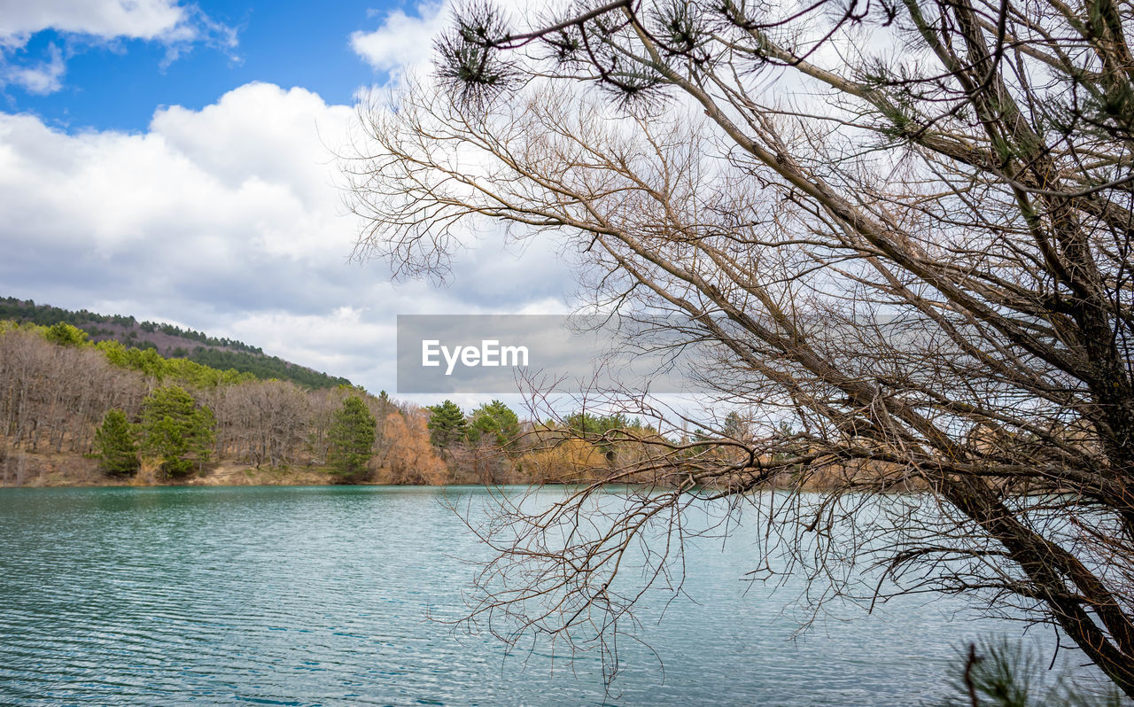 tree, water, plant, sky, tranquility, scenics - nature, cloud - sky, beauty in nature, tranquil scene, lake, nature, no people, day, waterfront, non-urban scene, bare tree, branch, outdoors