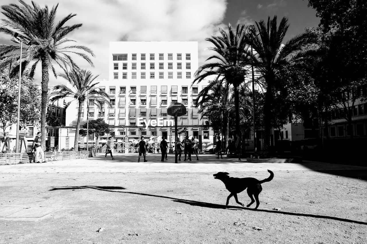 palm tree, building exterior, dog, street, built structure, one animal, tree, architecture, outdoors, city, mammal, domestic animals, animal themes, pets, sky, day, no people