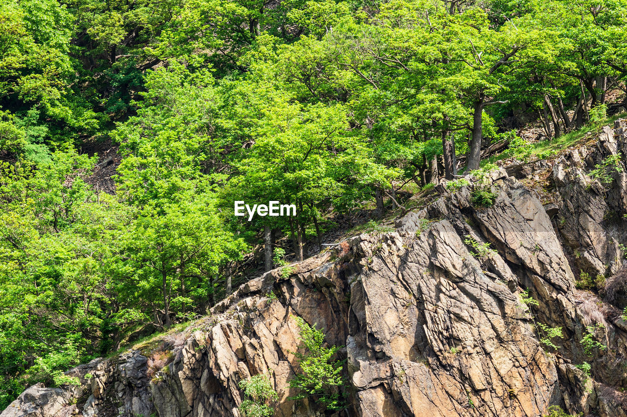 plant, tree, growth, nature, land, day, green color, rock, beauty in nature, no people, rock - object, tranquility, forest, solid, outdoors, trunk, tree trunk, low angle view, non-urban scene, tranquil scene, bark