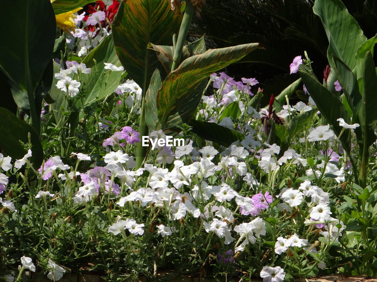 flowering plant, flower, plant, vulnerability, freshness, fragility, beauty in nature, growth, petal, nature, close-up, no people, day, flower head, white color, inflorescence, outdoors, plant part, leaf, botany, purple, flowerbed
