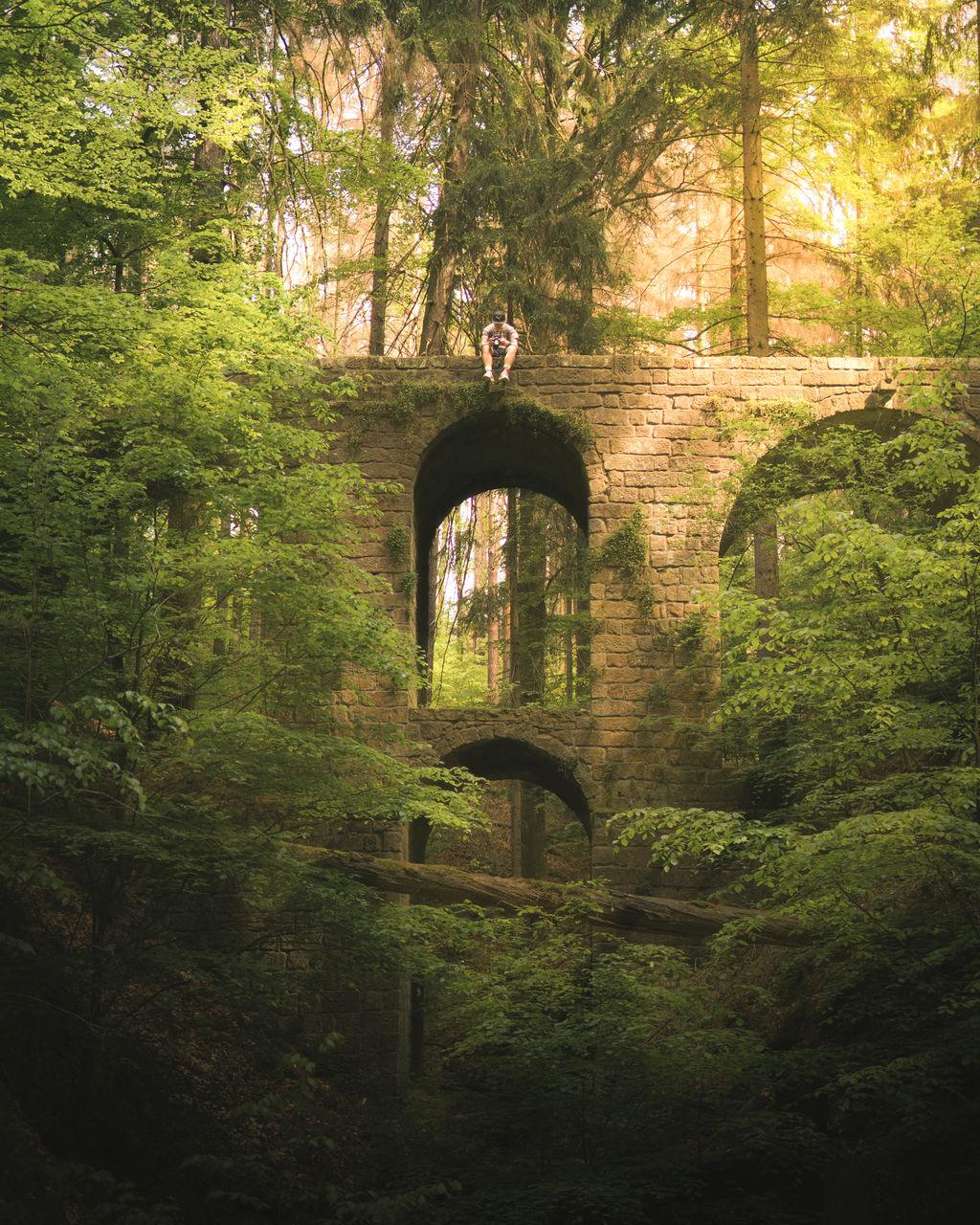 View of a hidden bridge in forest