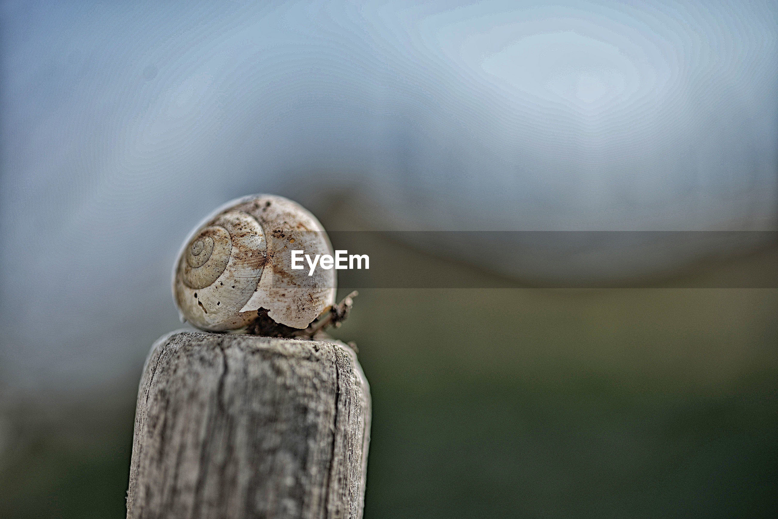 Conch shell on wooden post