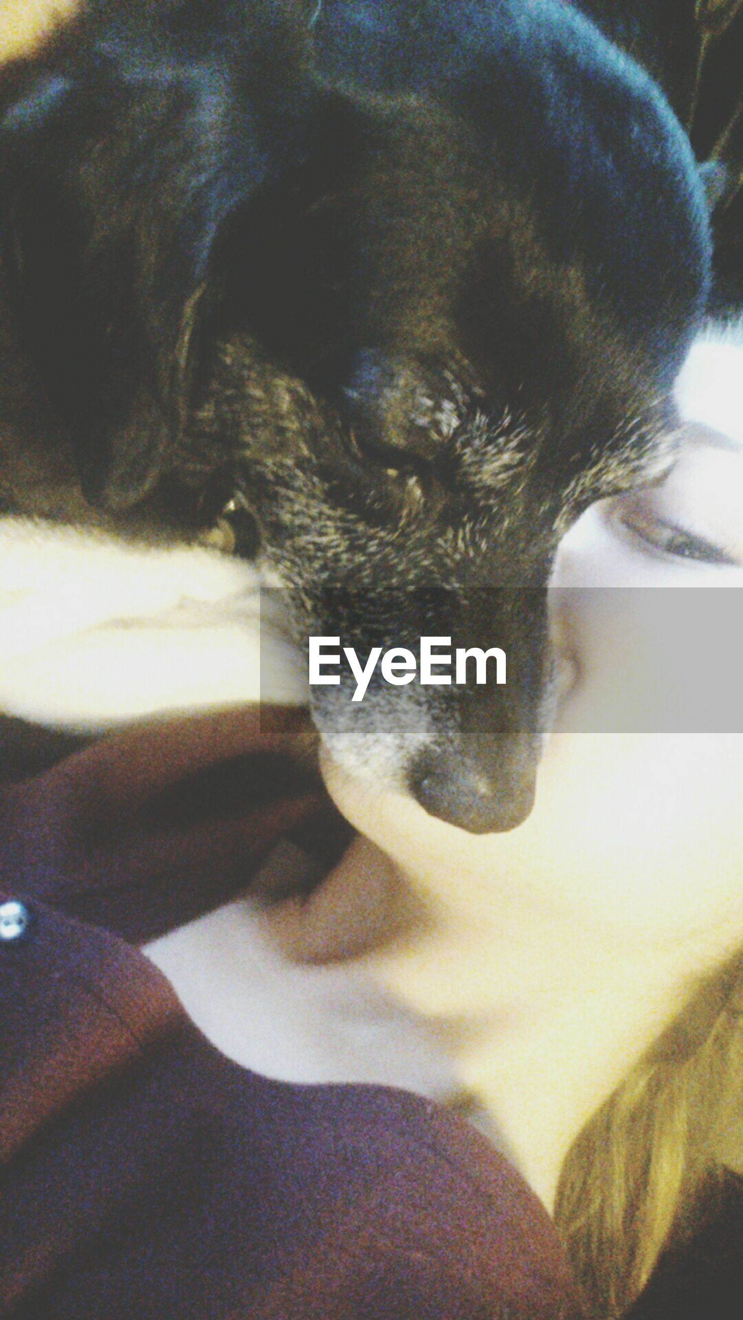 animal themes, one animal, pets, domestic animals, mammal, indoors, relaxation, resting, close-up, lying down, high angle view, part of, animal head, sleeping, domestic cat, animal body part, dog, cat