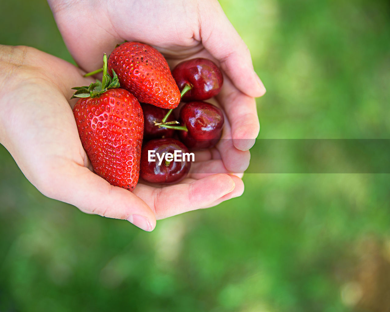 Cropped Image Of Hand Holding Fruits
