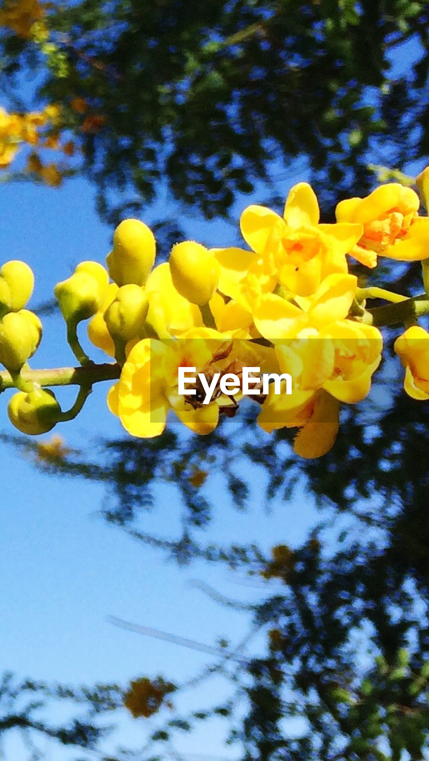 yellow, flower, nature, growth, beauty in nature, plant, outdoors, fragility, day, freshness, petal, no people, low angle view, blooming, tree, close-up, sky, flower head