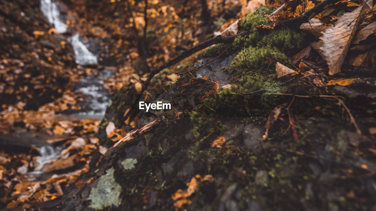 selective focus, nature, plant, tree, no people, growth, close-up, plant part, day, leaf, moss, land, tree trunk, forest, beauty in nature, trunk, outdoors, rock, tranquility, rock - object, change, bark, leaves, lichen