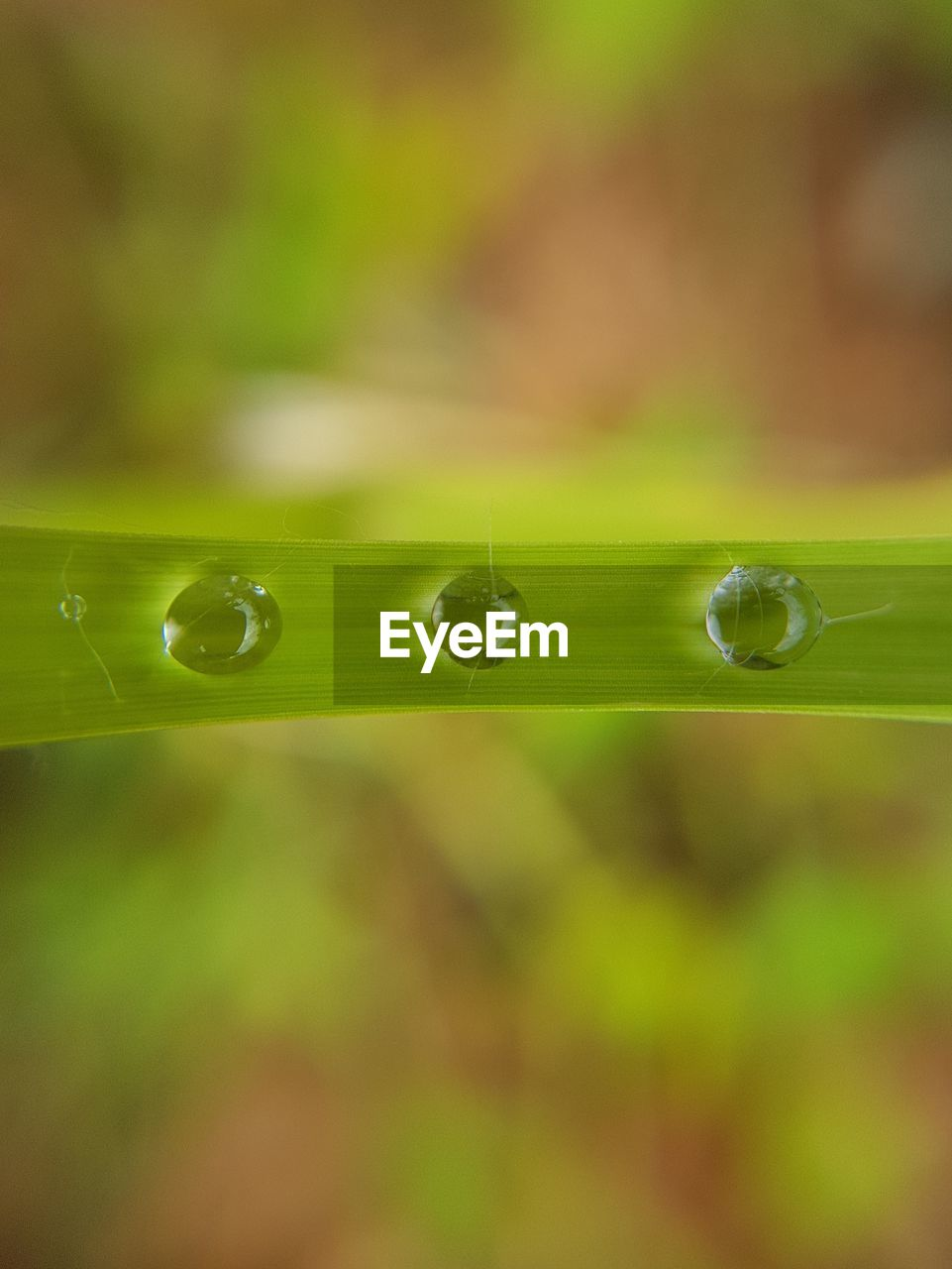 drop, nature, green color, water, fragility, freshness, beauty in nature, leaf, selective focus, focus on foreground, growth, purity, wet, close-up, droplet, no people, outdoors, day, plant, raindrop, grass, splashing droplet