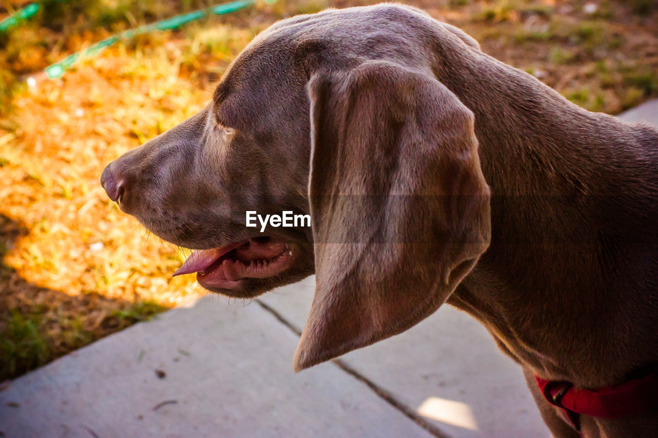 dog, domestic animals, animal themes, pets, mammal, one animal, no people, outdoors, close-up, day, nature