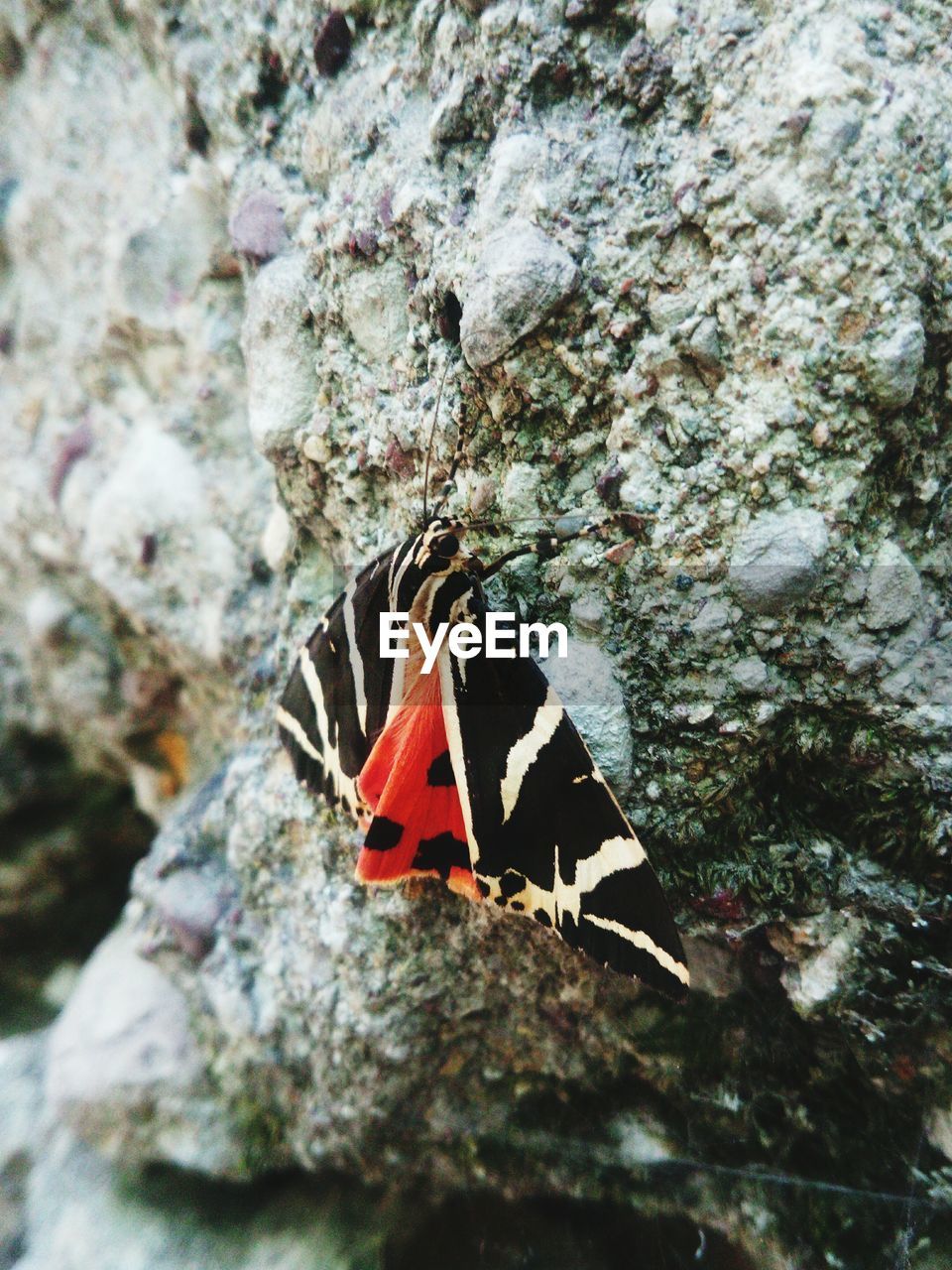 animal themes, animal, animals in the wild, animal wildlife, one animal, no people, insect, invertebrate, rock, close-up, solid, nature, rock - object, day, vertebrate, beauty in nature, outdoors, selective focus, animal wing, animal markings, butterfly - insect, marine, butterfly