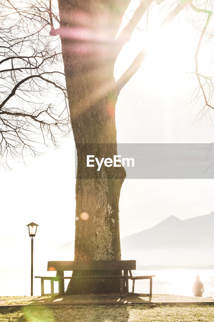 tree, water, nature, trunk, tree trunk, plant, day, sunlight, outdoors, tranquility, one person, beauty in nature, bare tree, real people, scenics - nature, sky, tranquil scene, lake, land, lens flare