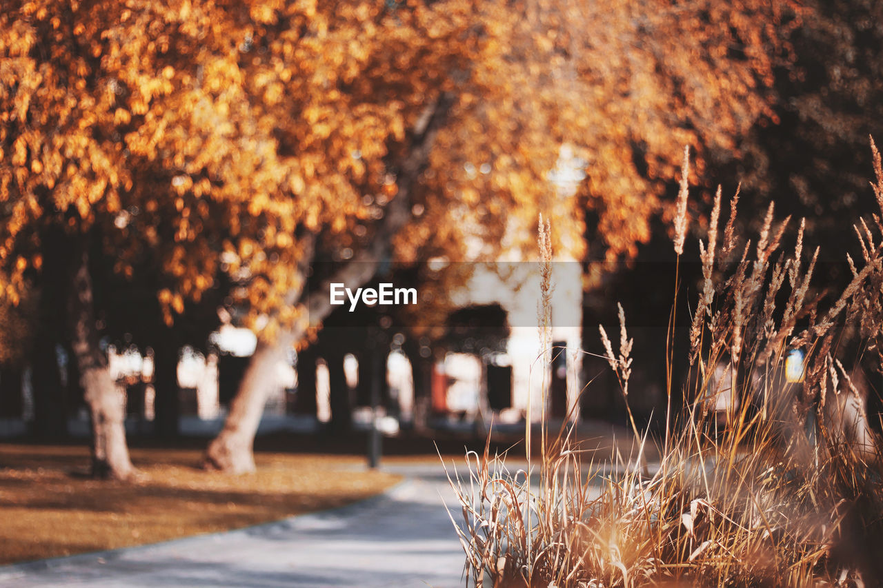 tree, nature, plant, no people, selective focus, autumn, growth, outdoors, day, tree trunk, trunk, beauty in nature, change, focus on foreground, close-up, sunlight, orange color, plant part, illuminated, park, treelined