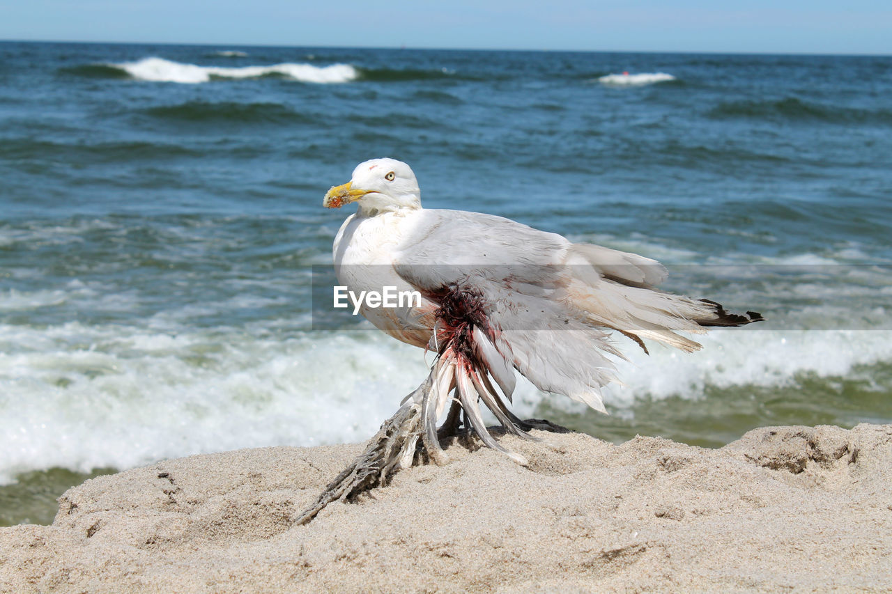 sea, water, beach, bird, animal, land, animal wildlife, animal themes, vertebrate, animals in the wild, one animal, day, nature, no people, focus on foreground, sand, seagull, perching, horizon over water