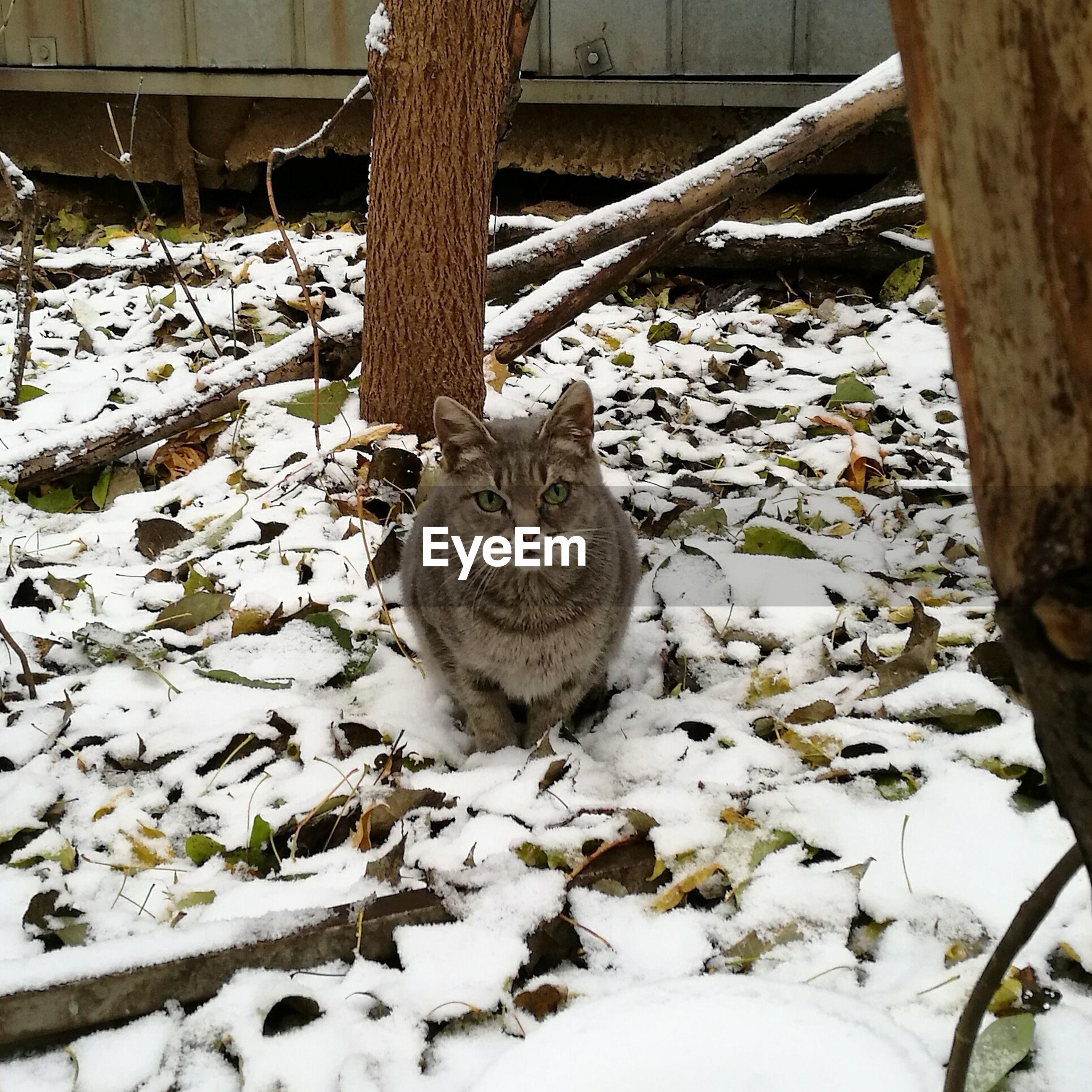 Portrait of cat on snow