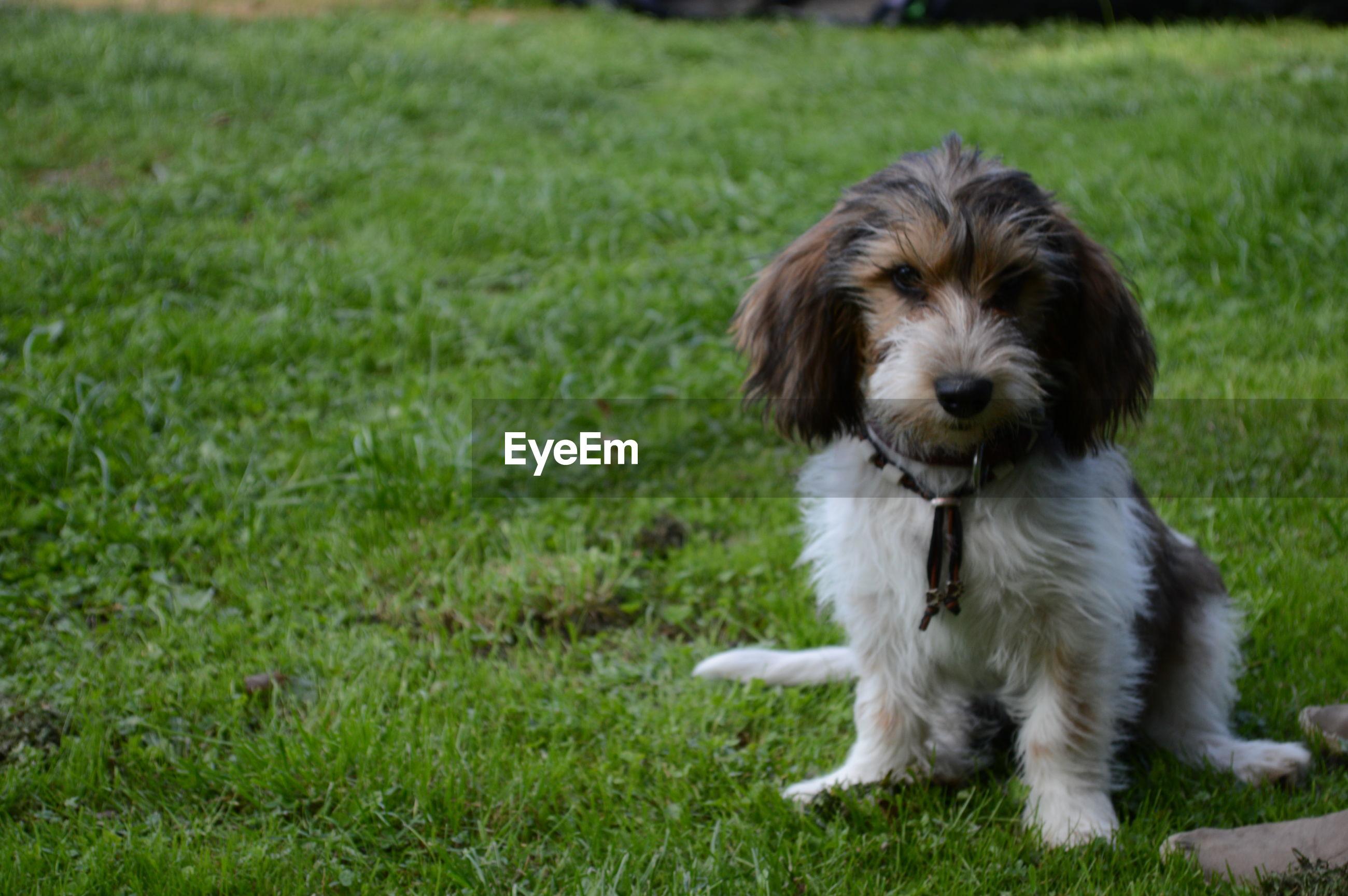 PORTRAIT OF DOG ON GRASS FIELD