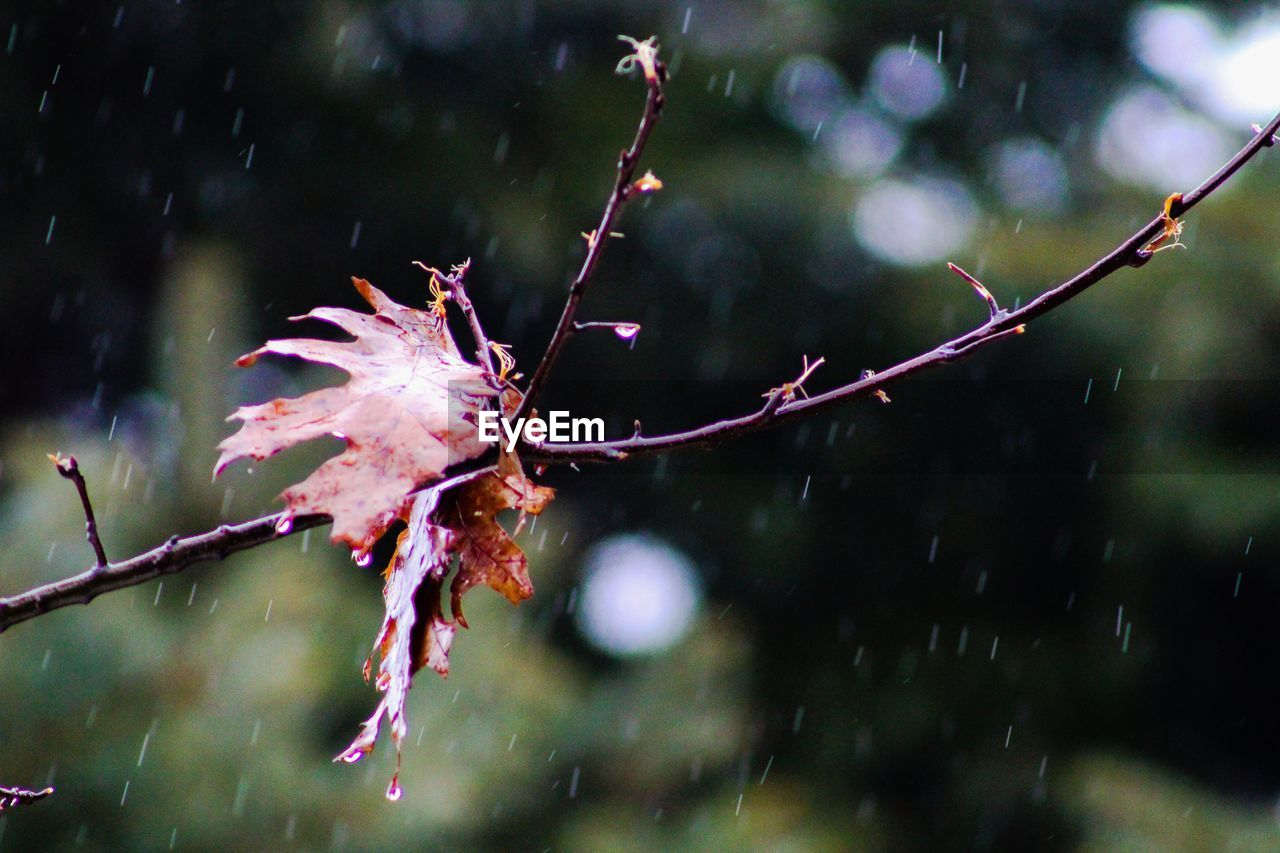 focus on foreground, wet, rain, nature, drop, close-up, weather, water, outdoors, no people, raindrop, autumn, beauty in nature, fragility, day, leaf, growth, cold temperature, branch, freshness, tree