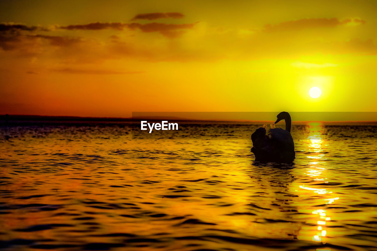 sunset, sky, water, sea, orange color, beauty in nature, scenics - nature, waterfront, real people, horizon over water, horizon, silhouette, tranquility, two people, tranquil scene, nature, cloud - sky, idyllic, sun, couple - relationship, outdoors
