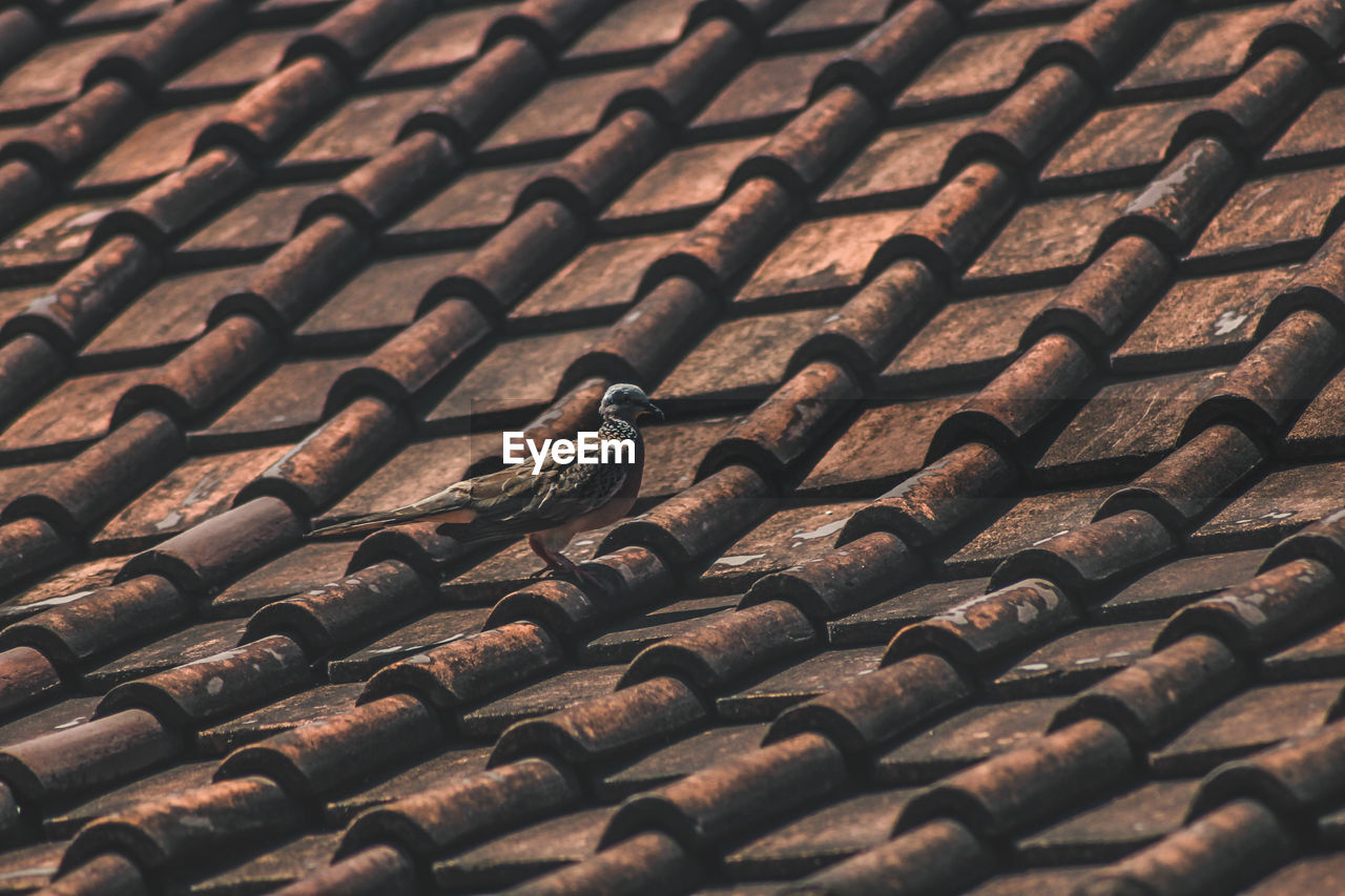 Bird Perching On Roof Tiles