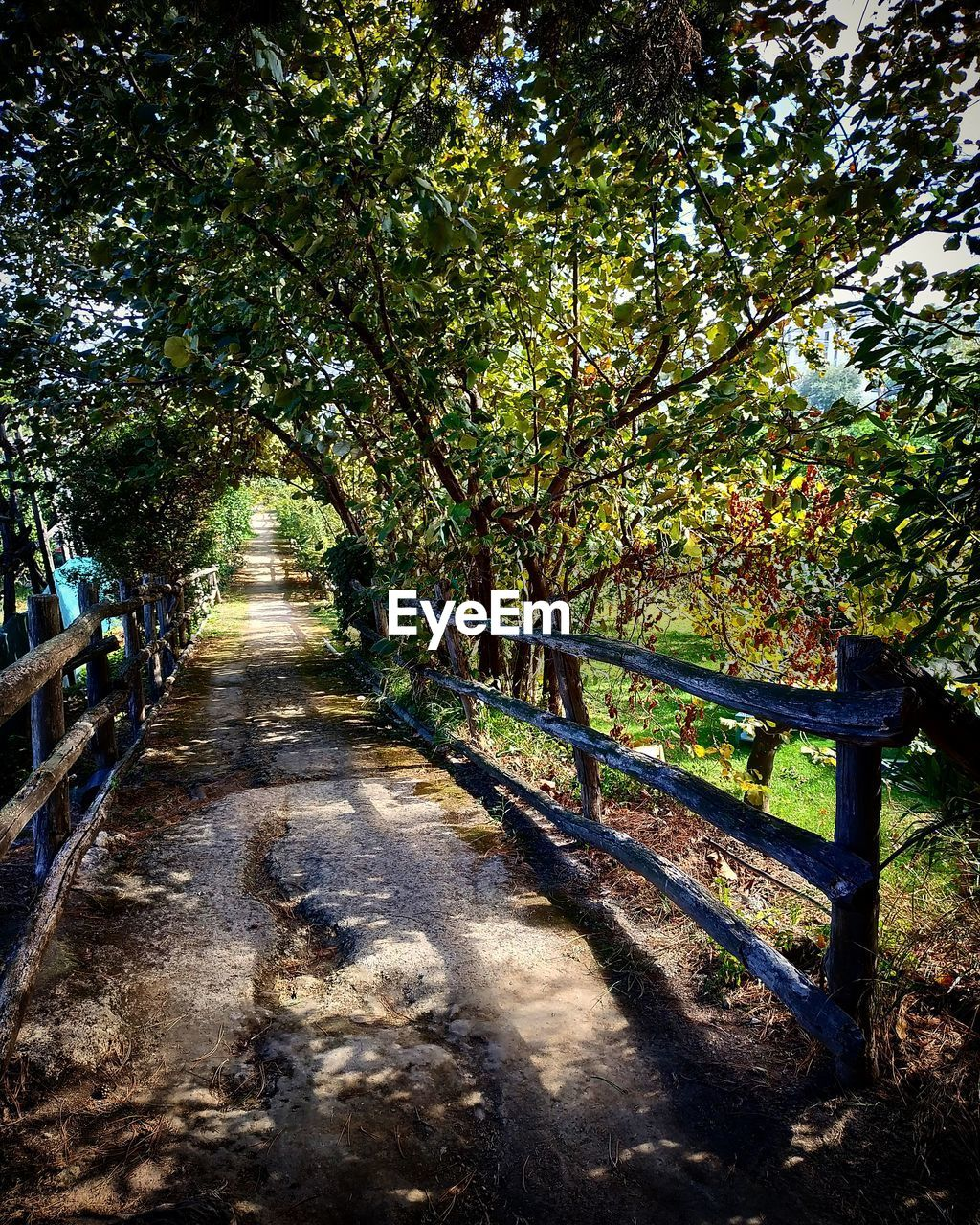 tree, plant, direction, the way forward, nature, footpath, day, beauty in nature, tranquility, railing, land, shadow, tranquil scene, growth, sunlight, outdoors, no people, forest, scenics - nature, wood - material, diminishing perspective