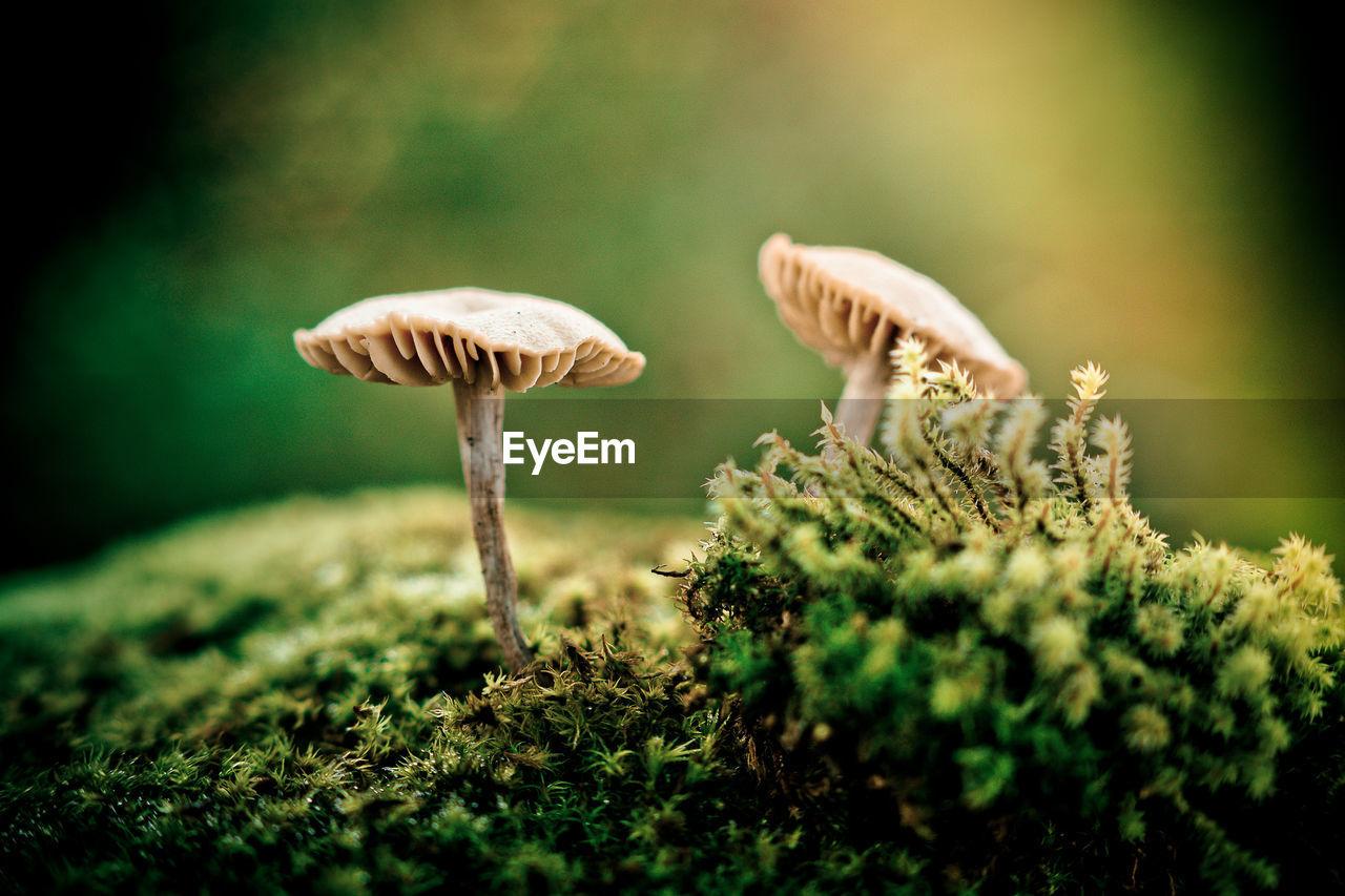 Macro Shot Of Mushrooms On Moss