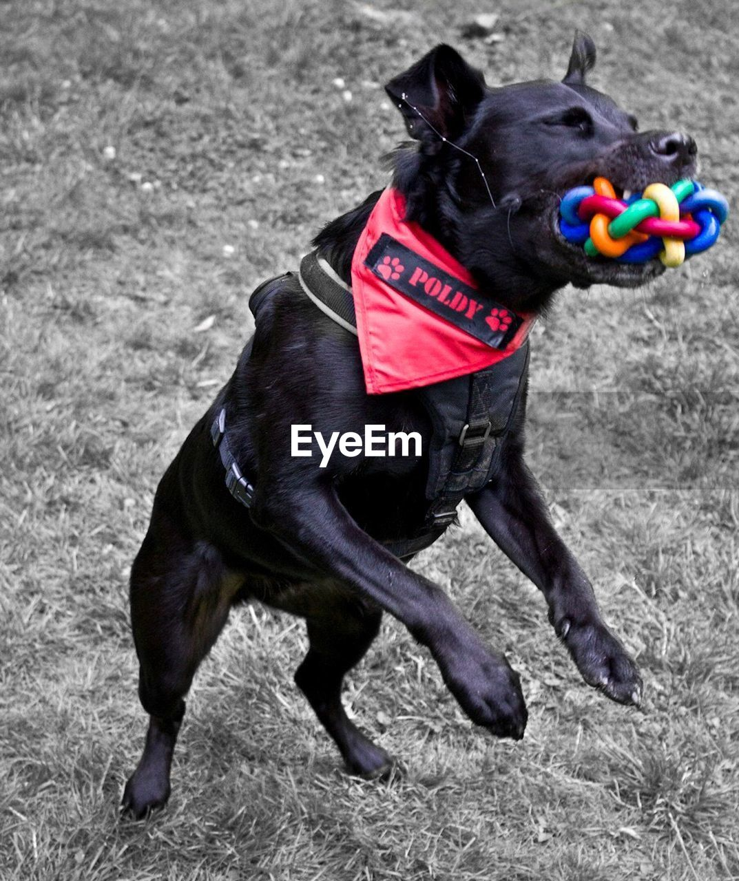 dog, pets, animal themes, domestic animals, one animal, mammal, pet collar, black color, no people, outdoors, day