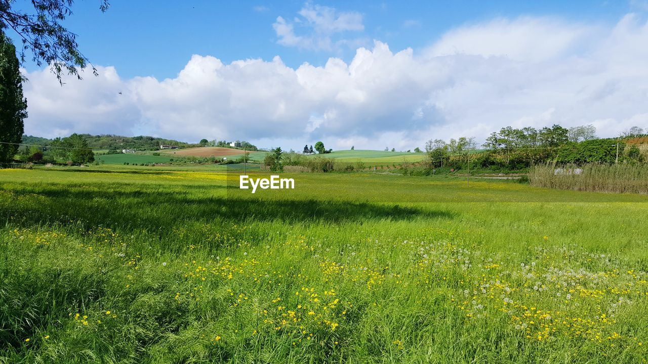 plant, field, green color, land, environment, landscape, sky, tranquil scene, beauty in nature, growth, cloud - sky, grass, scenics - nature, tranquility, nature, tree, day, rural scene, no people, agriculture, outdoors