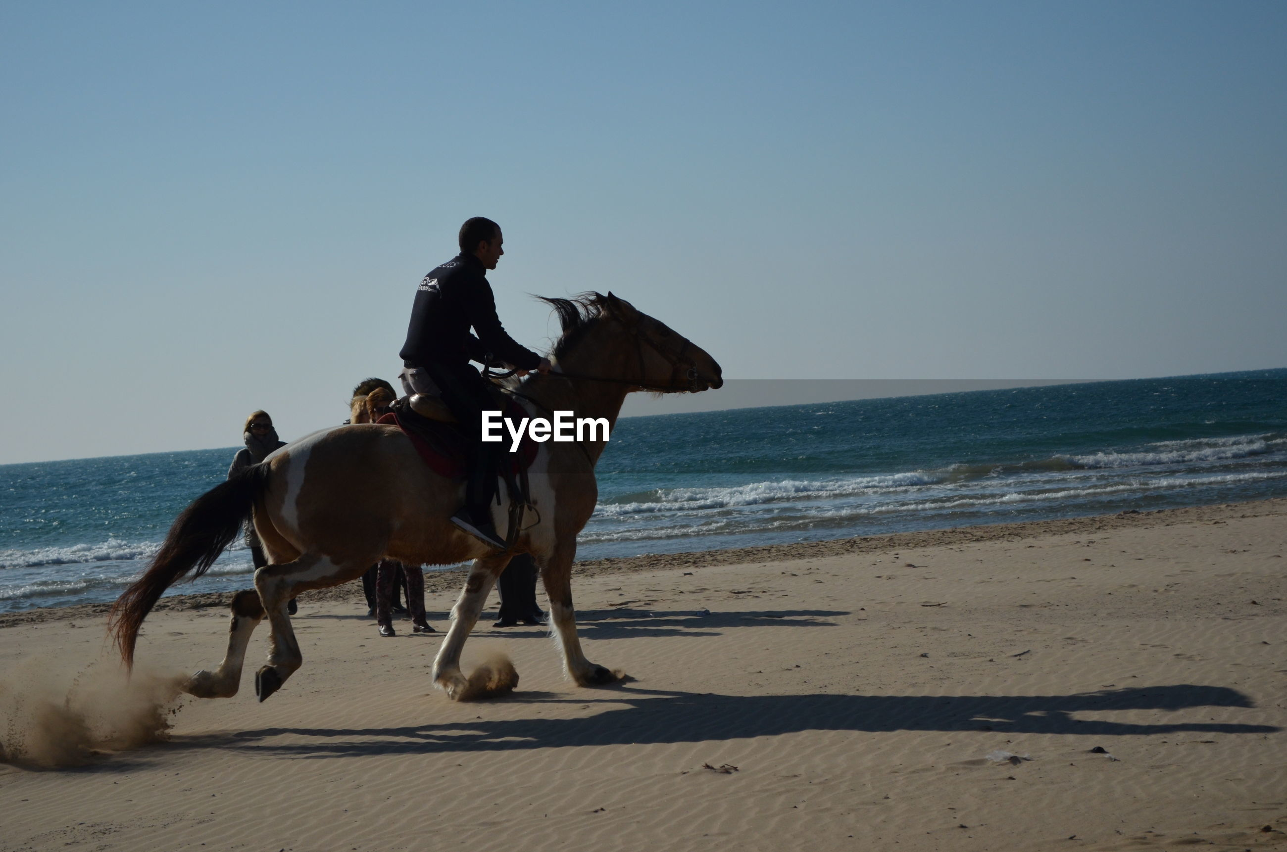 animal themes, beach, sea, domestic animals, clear sky, sand, mammal, horizon over water, shore, water, one animal, copy space, full length, horse, dog, pets, nature, walking, sunlight
