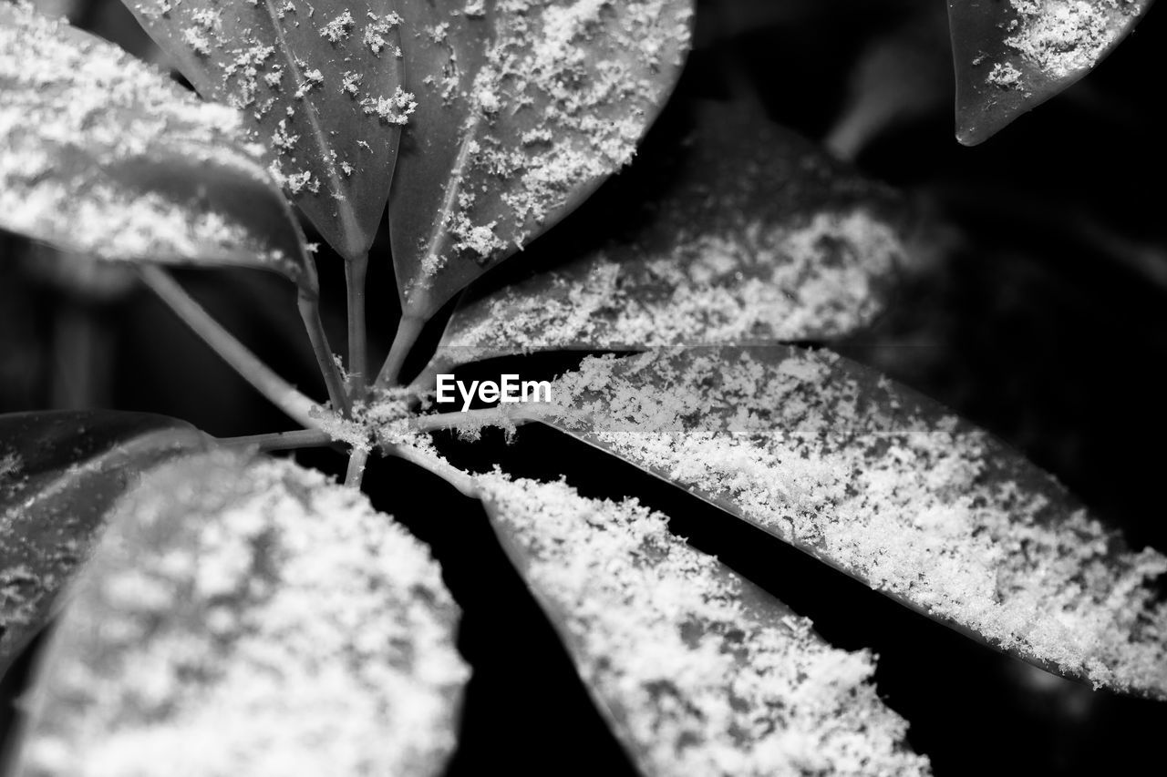 selective focus, nature, no people, close-up, day, leaf, growth, outdoors, beauty in nature, freshness