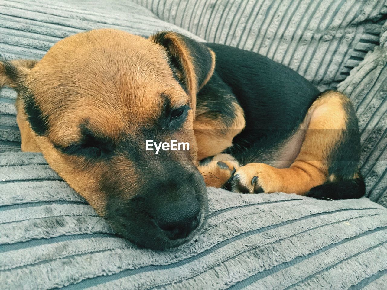 dog, canine, one animal, domestic, pets, relaxation, mammal, domestic animals, animal, animal themes, resting, vertebrate, lying down, sleeping, no people, close-up, furniture, eyes closed, indoors, bed, animal head