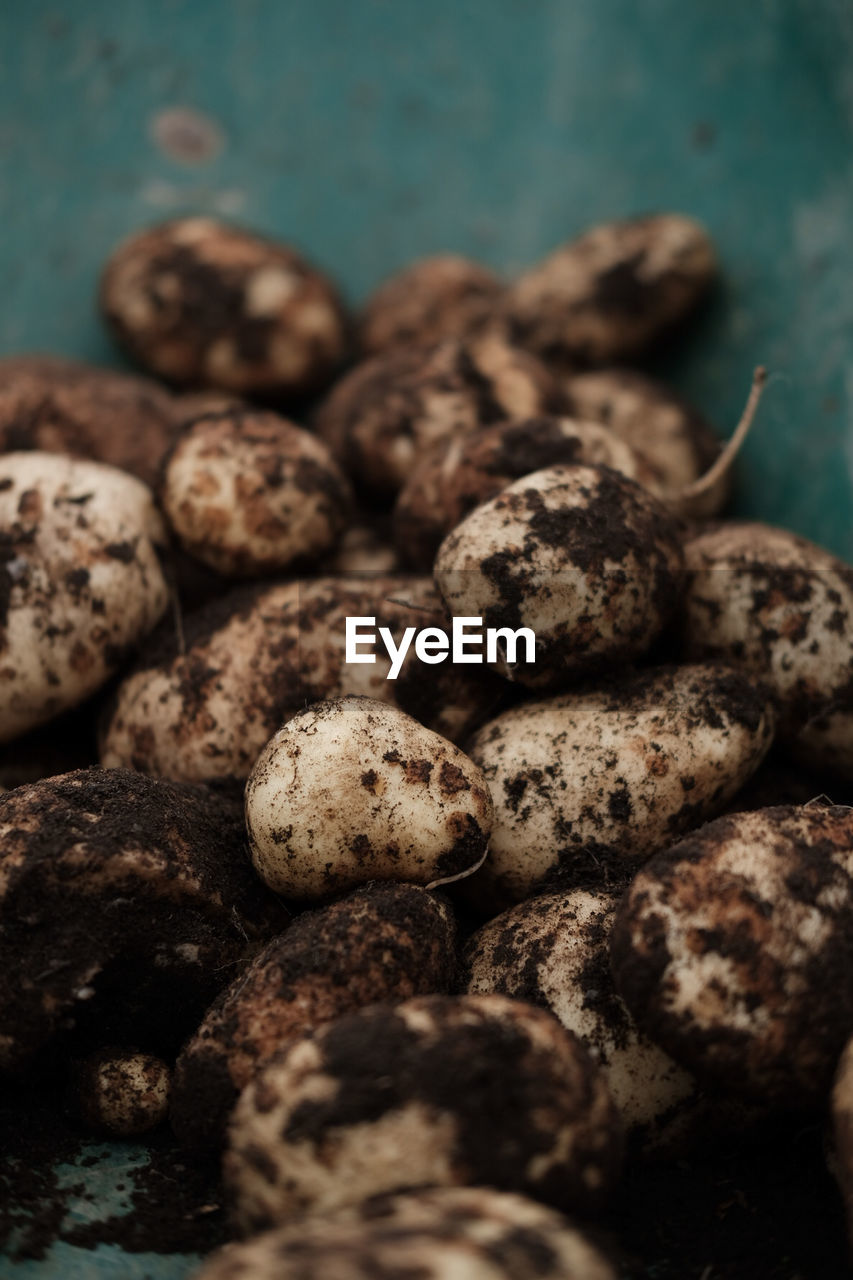 Close-Up Of Potatoes With Mud In Container