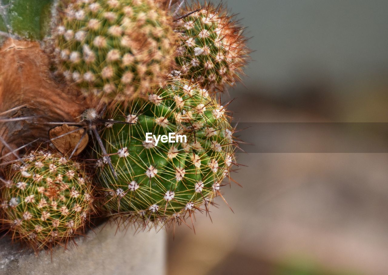 cactus, succulent plant, plant, thorn, close-up, growth, focus on foreground, day, spiked, nature, beauty in nature, no people, selective focus, green color, sharp, warning sign, sign, outdoors, natural pattern, communication, spiky, climate, arid climate