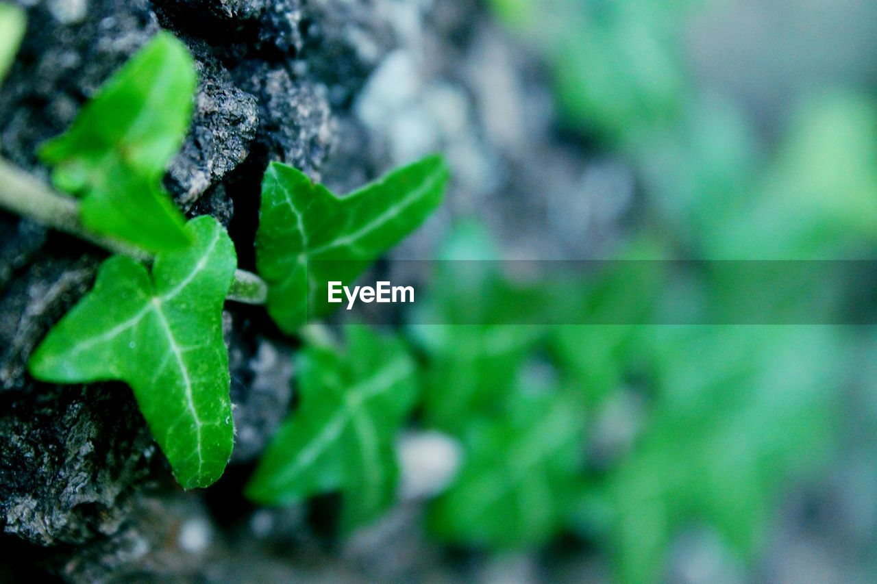 green color, leaf, growth, plant, close-up, nature, no people, day, outdoors, fragility, freshness, beauty in nature