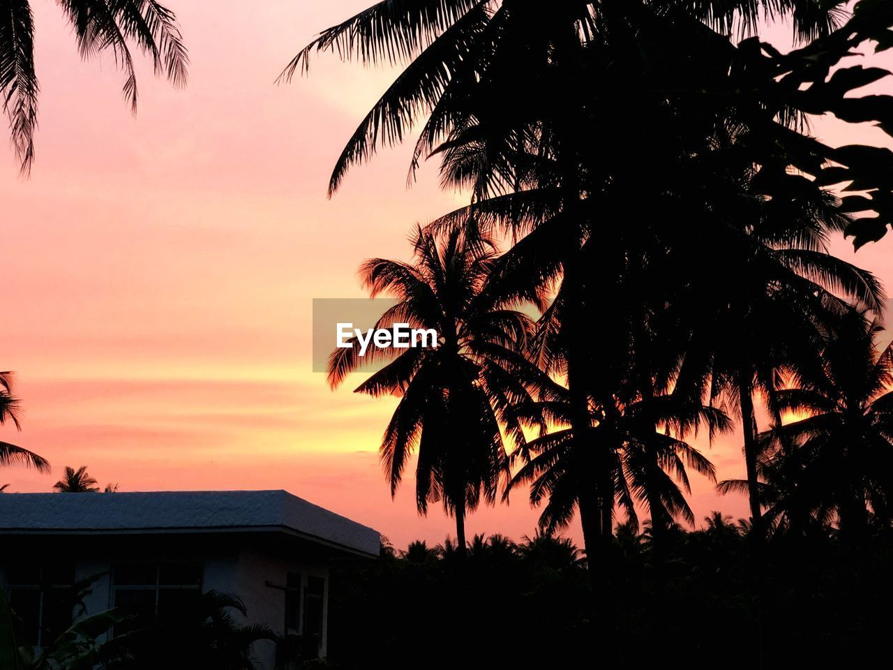 sky, sunset, tree, tropical climate, silhouette, plant, palm tree, built structure, beauty in nature, orange color, building exterior, architecture, nature, no people, building, cloud - sky, scenics - nature, house, tranquility, outdoors, coconut palm tree, romantic sky