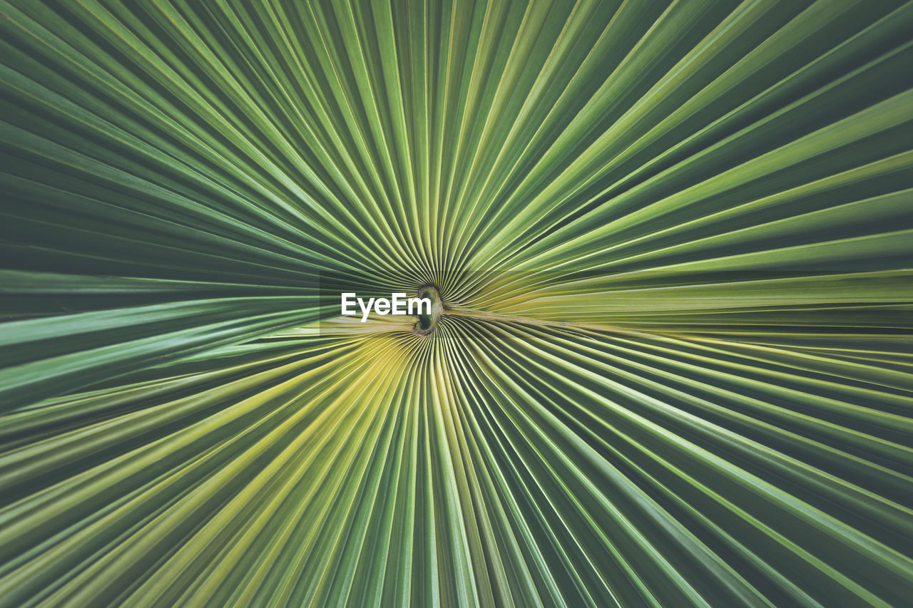 full frame, pattern, backgrounds, green color, leaf, close-up, no people, plant part, abstract, palm tree, palm leaf, beauty in nature, growth, freshness, textured, striped, plant, tree, nature, abstract backgrounds, concentric