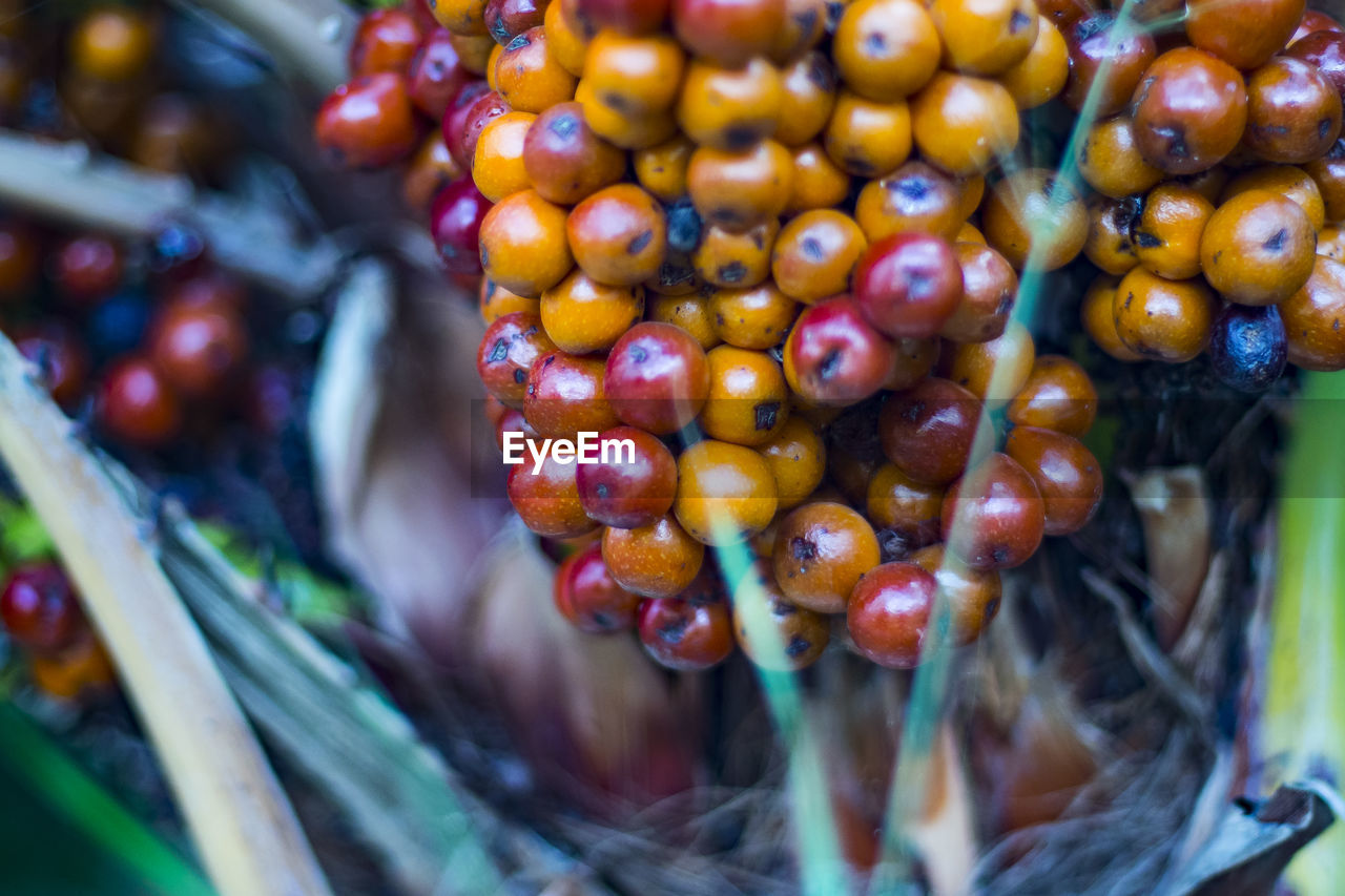 fruit, food and drink, food, freshness, healthy eating, retail, grape, day, outdoors, no people, close-up, agriculture, nature, supermarket