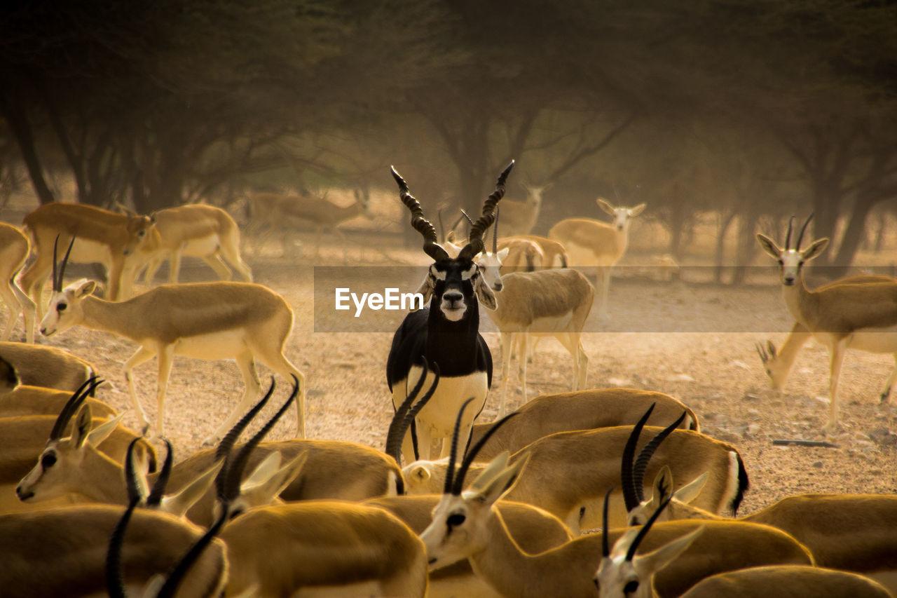 Wild Animals On Field