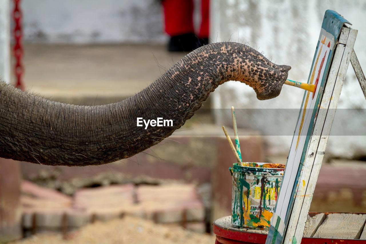 Cropped Image Of Elephant Painting On Canvas Using Paintbrush