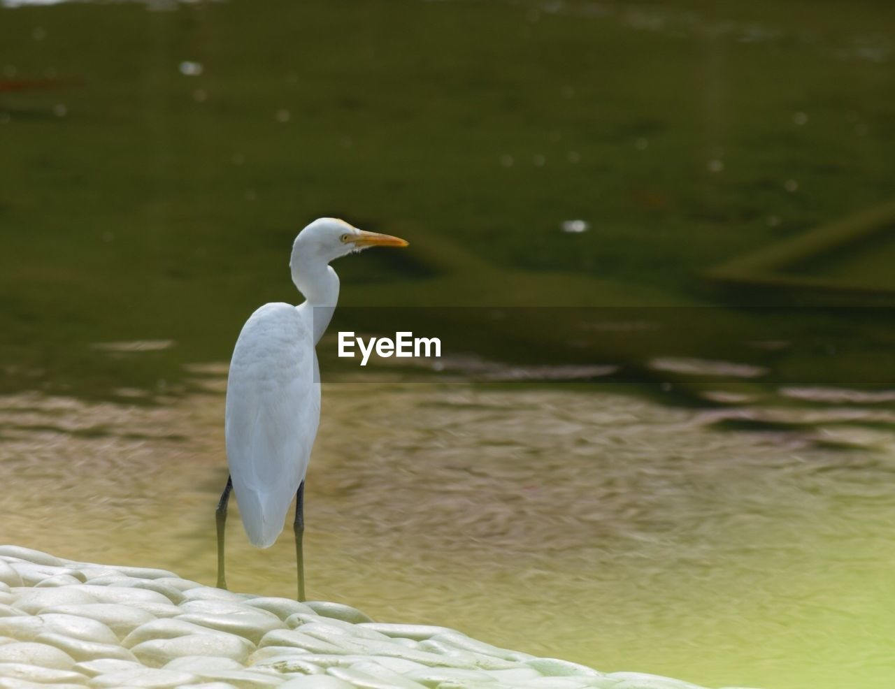 Bird perching on lakeshore