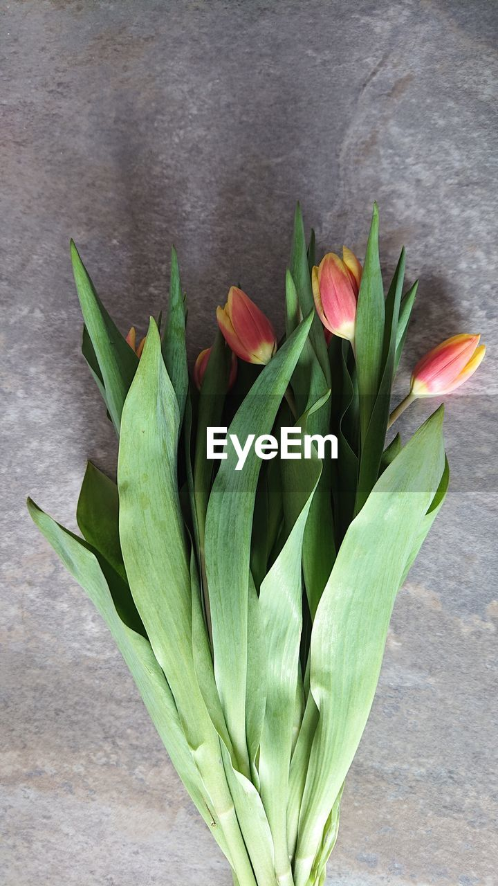 green color, freshness, flowering plant, flower, plant, plant part, leaf, nature, close-up, beauty in nature, no people, table, growth, indoors, fragility, vulnerability, petal, flower head, inflorescence, high angle view, flower arrangement, leaves, bouquet
