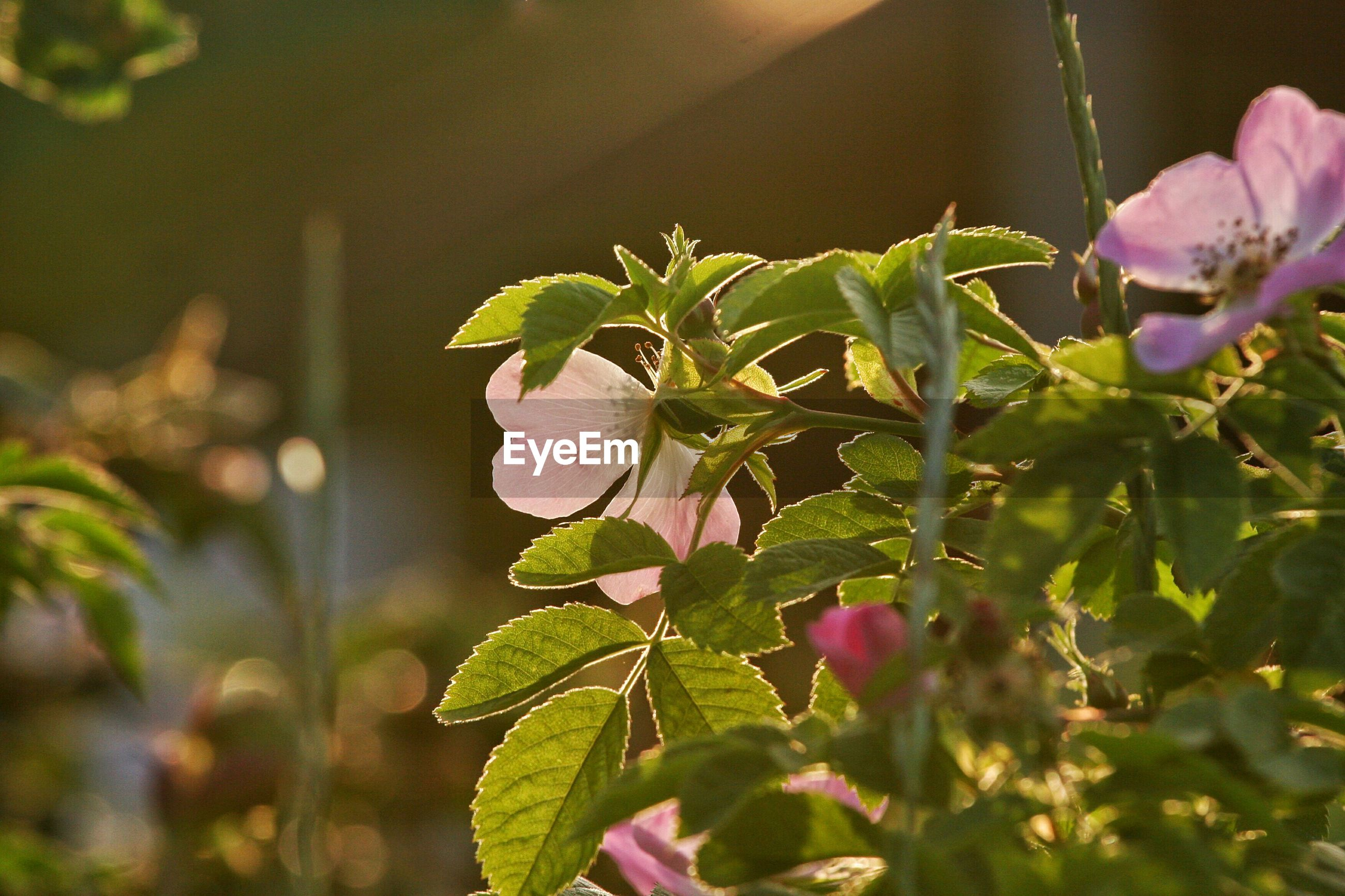 Low angle view of purple flowering plant growing in yard