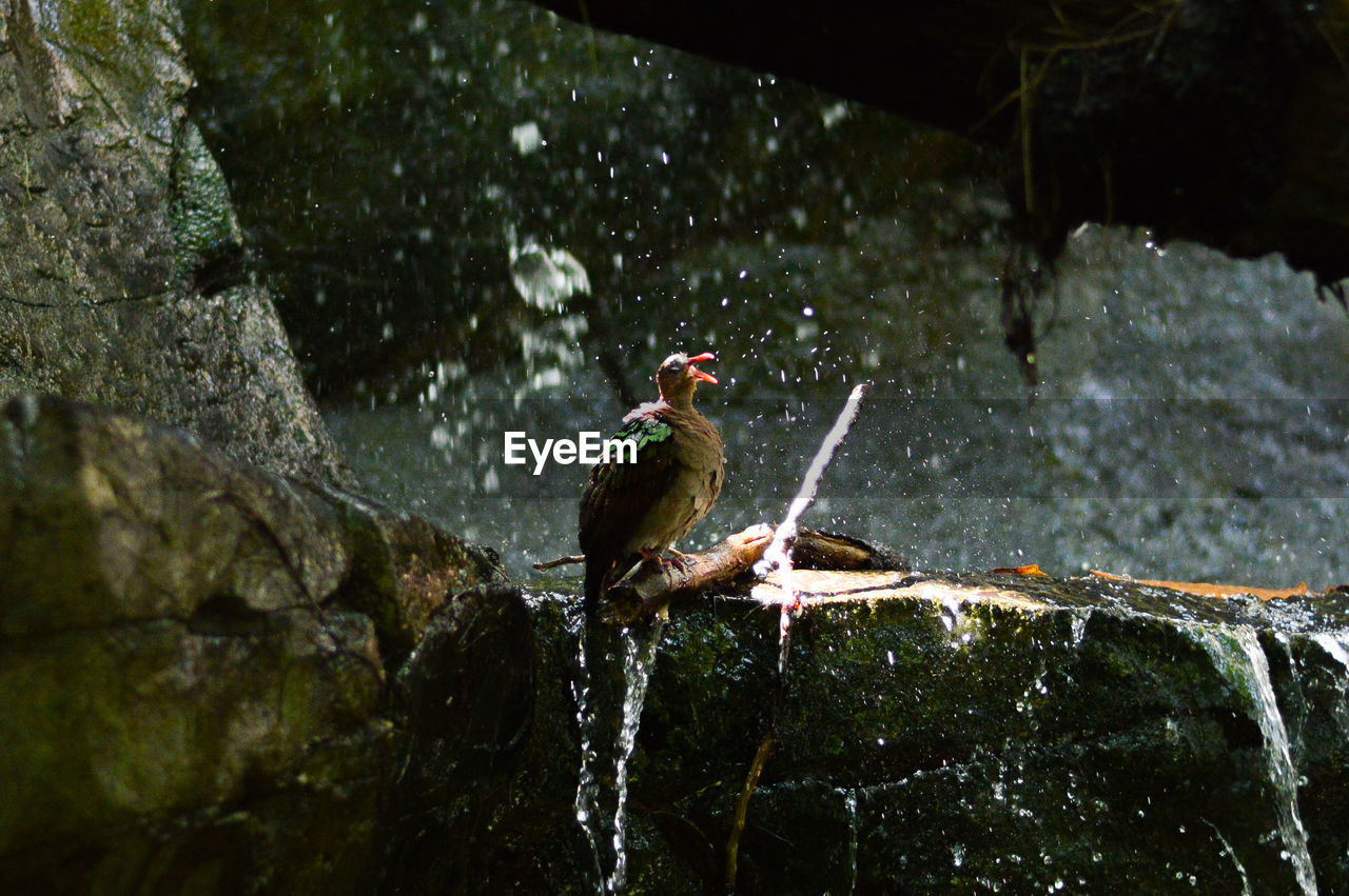 BIRD PERCHING ON ROCK IN WATER