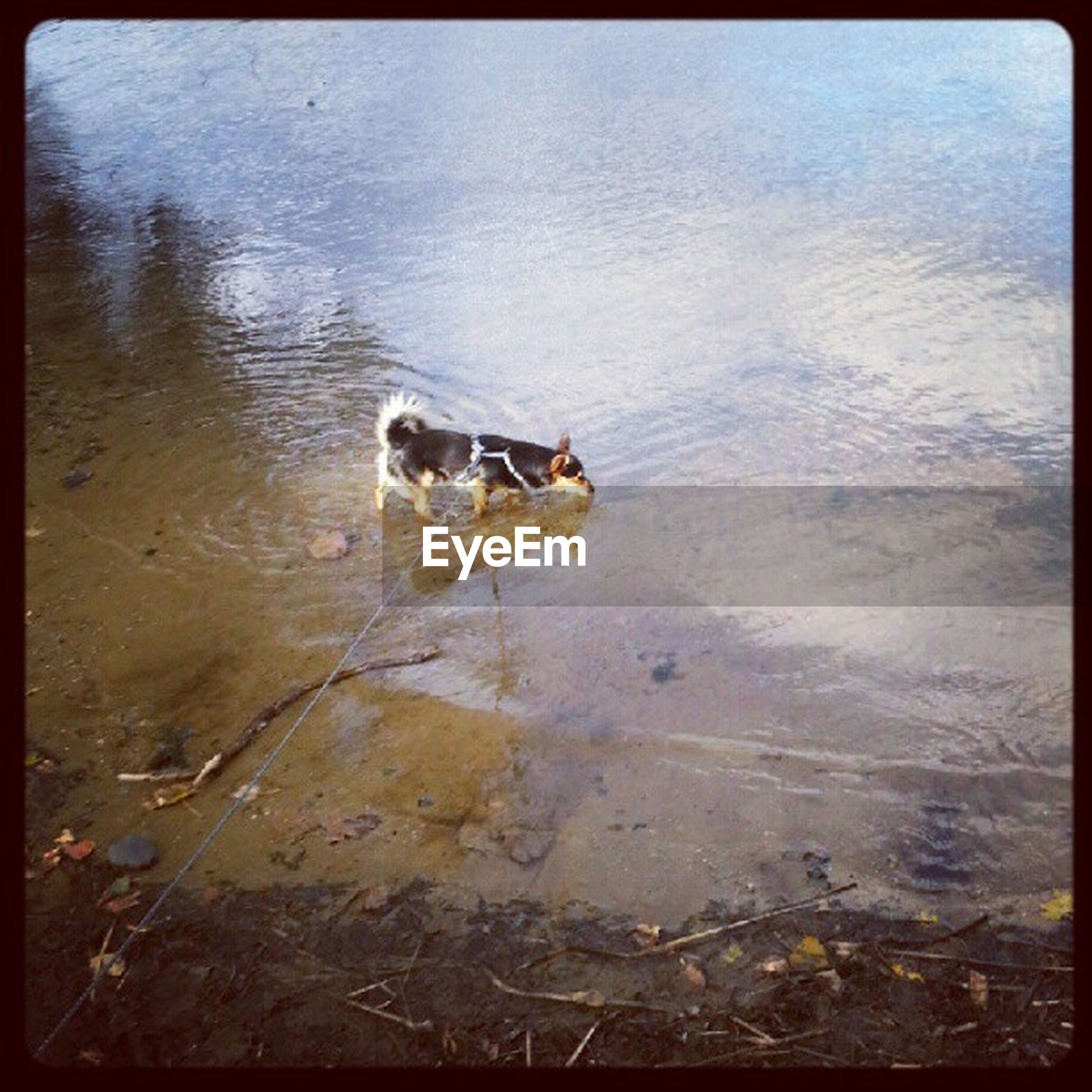 transfer print, water, auto post production filter, animal themes, one animal, high angle view, lake, reflection, nature, wildlife, waterfront, swimming, animals in the wild, day, rippled, outdoors, tranquility, no people, bird, dog