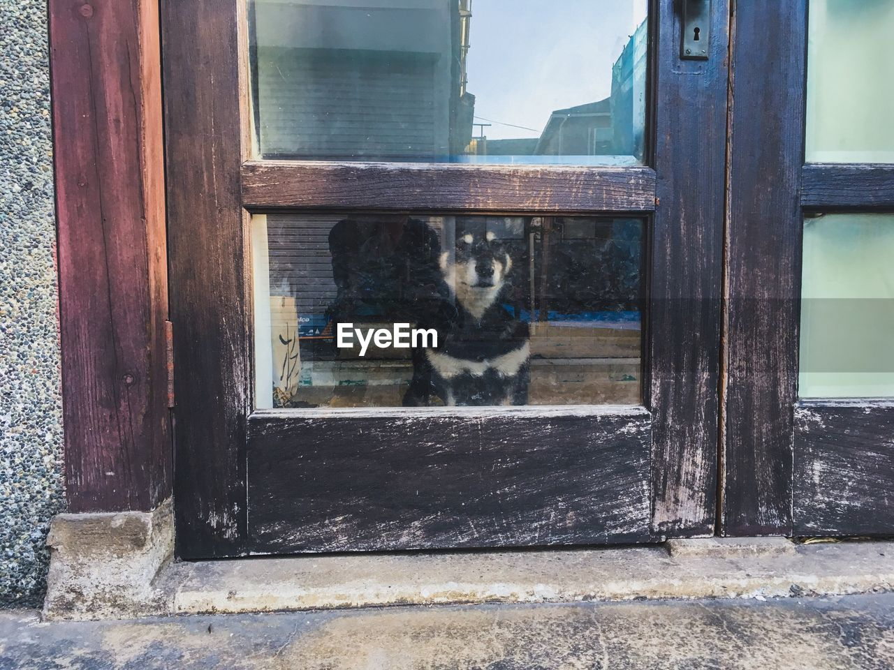 domestic, pets, mammal, one animal, domestic animals, animal, animal themes, vertebrate, no people, wood - material, cat, window, domestic cat, feline, day, architecture, glass - material, transparent, built structure, building exterior, outdoors