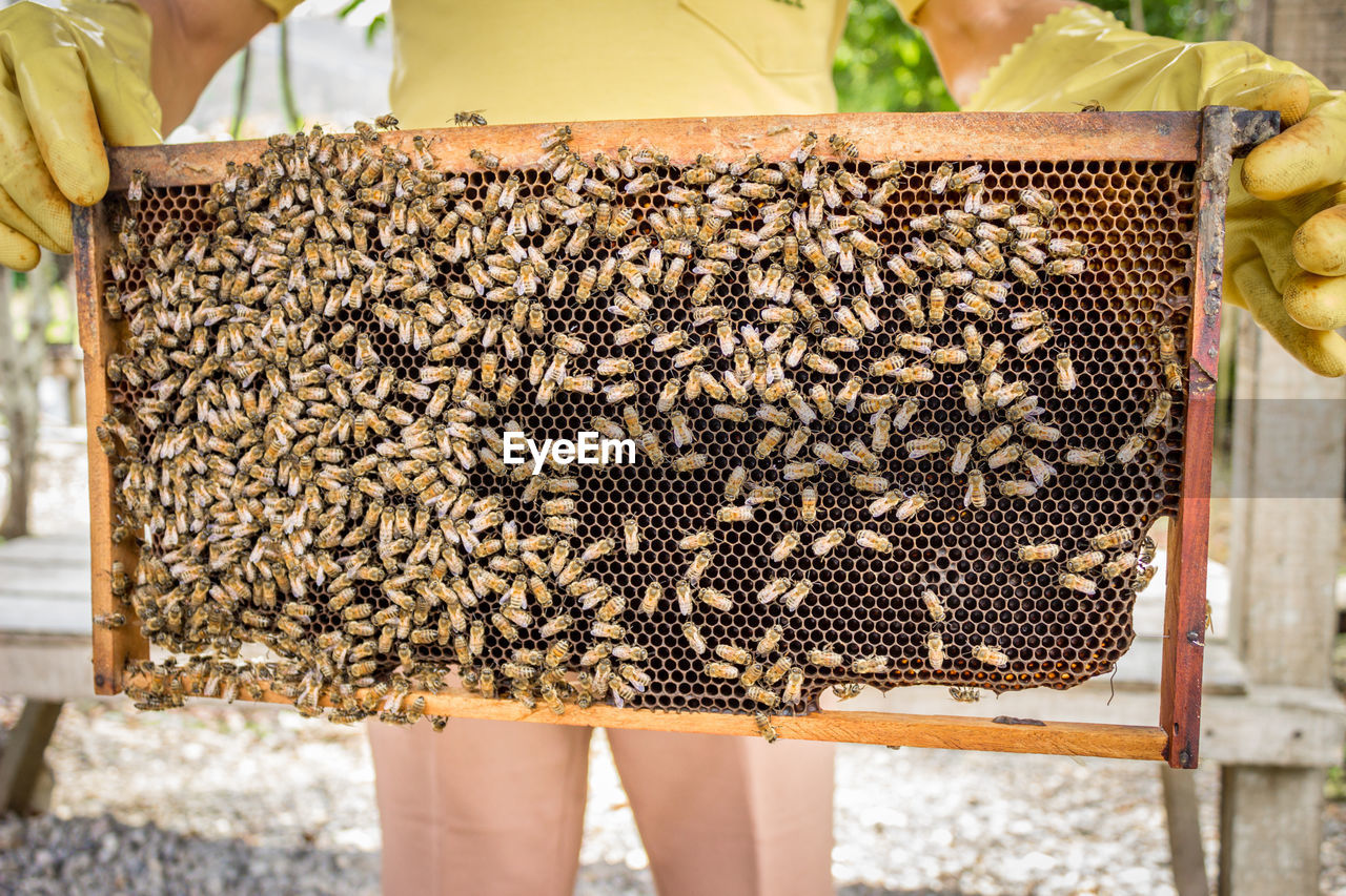 Midsection Of Beekeeper Holding Beehive On Field